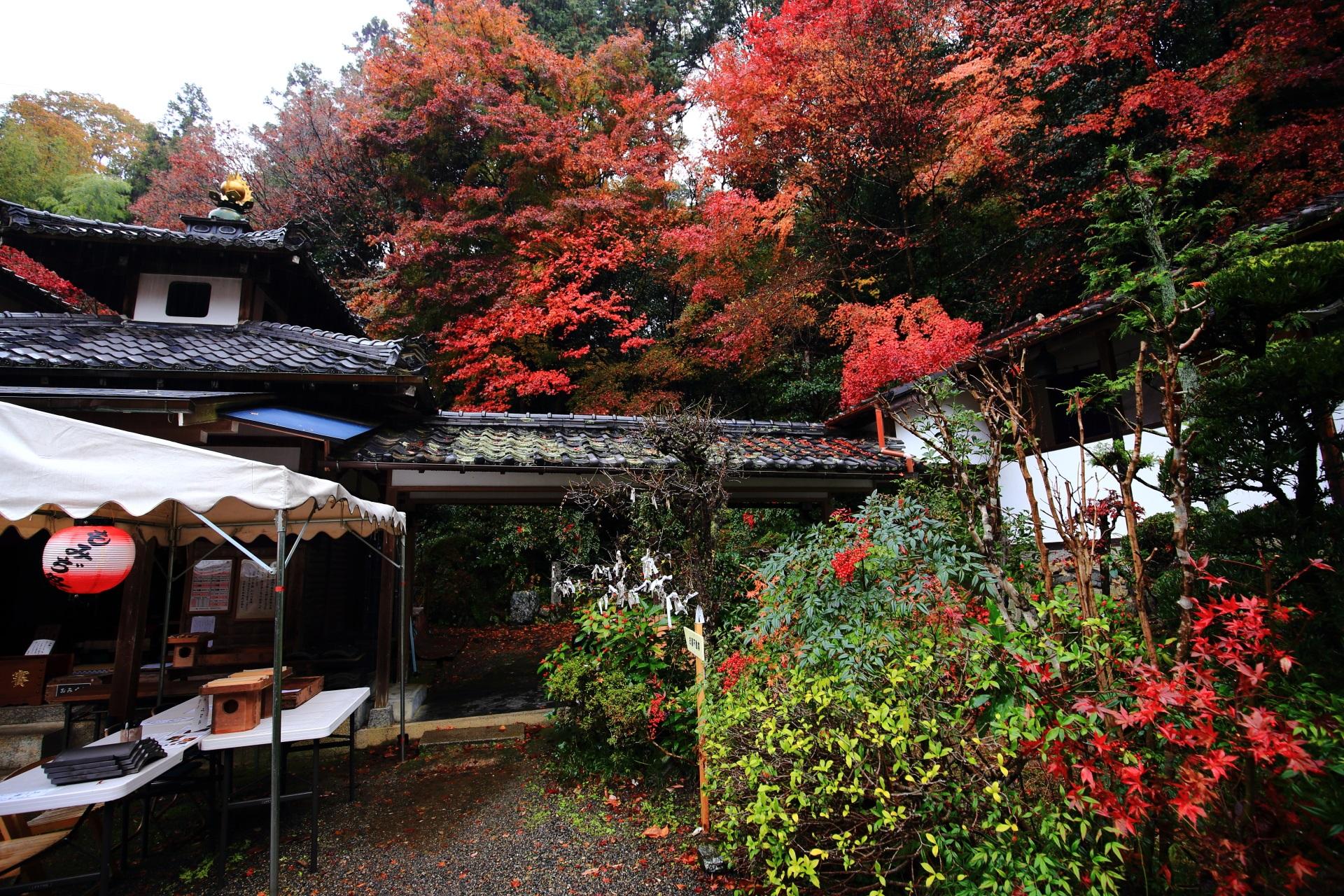 双林院の見ごろの紅葉と赤い実をつけた南天