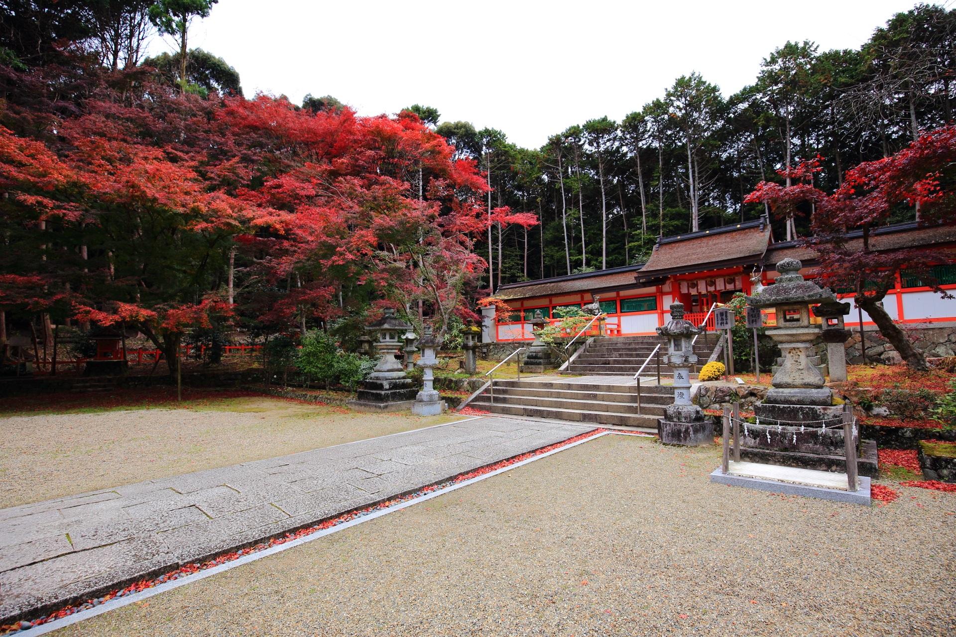 本殿を彩る豪快に色づく雄大な紅葉
