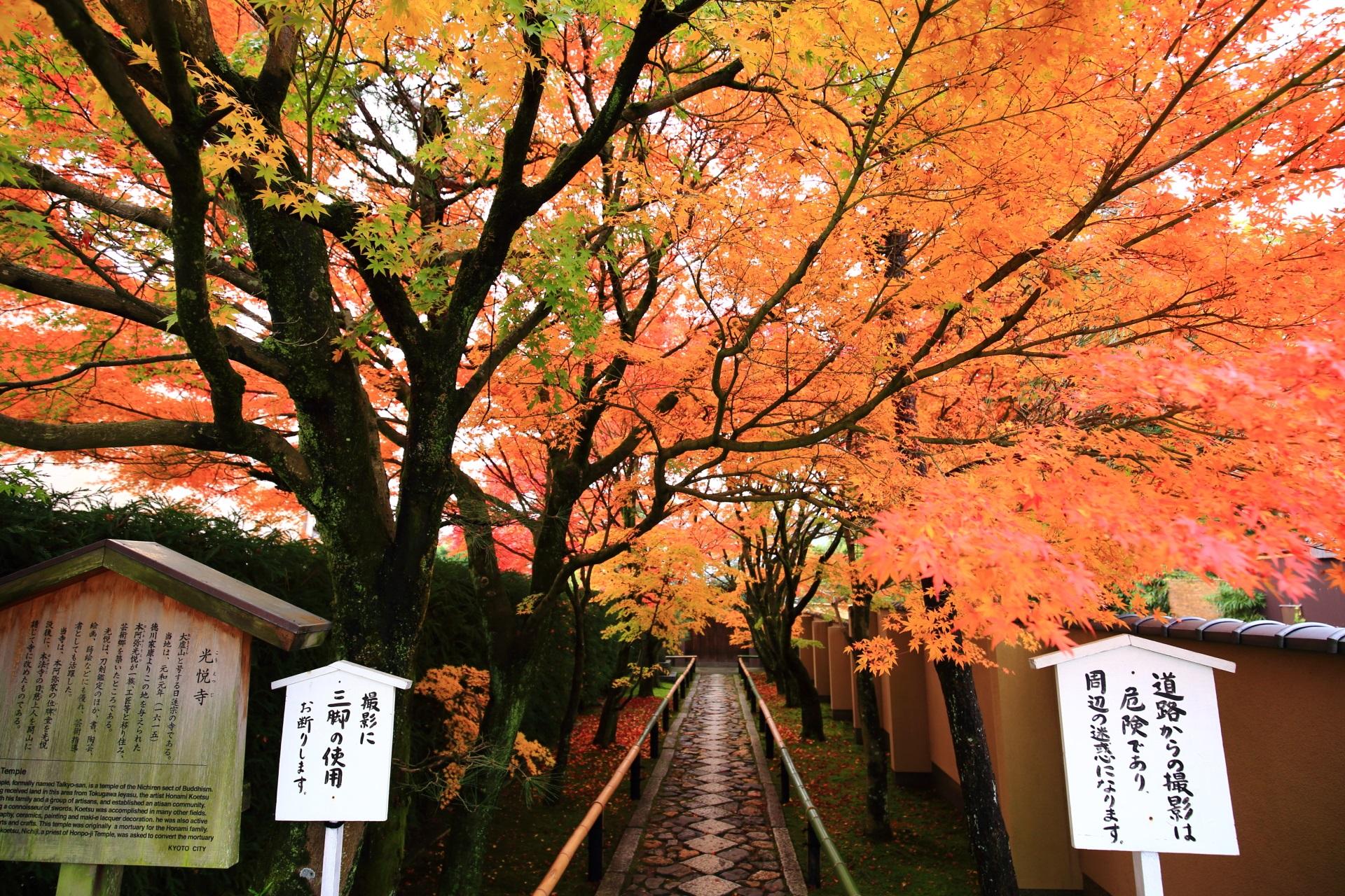 紅葉の華やぐ光悦寺の参道の入口