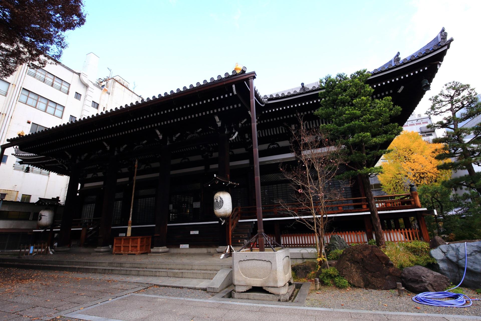 本能寺の本堂と右後ろの黄色い大銀杏