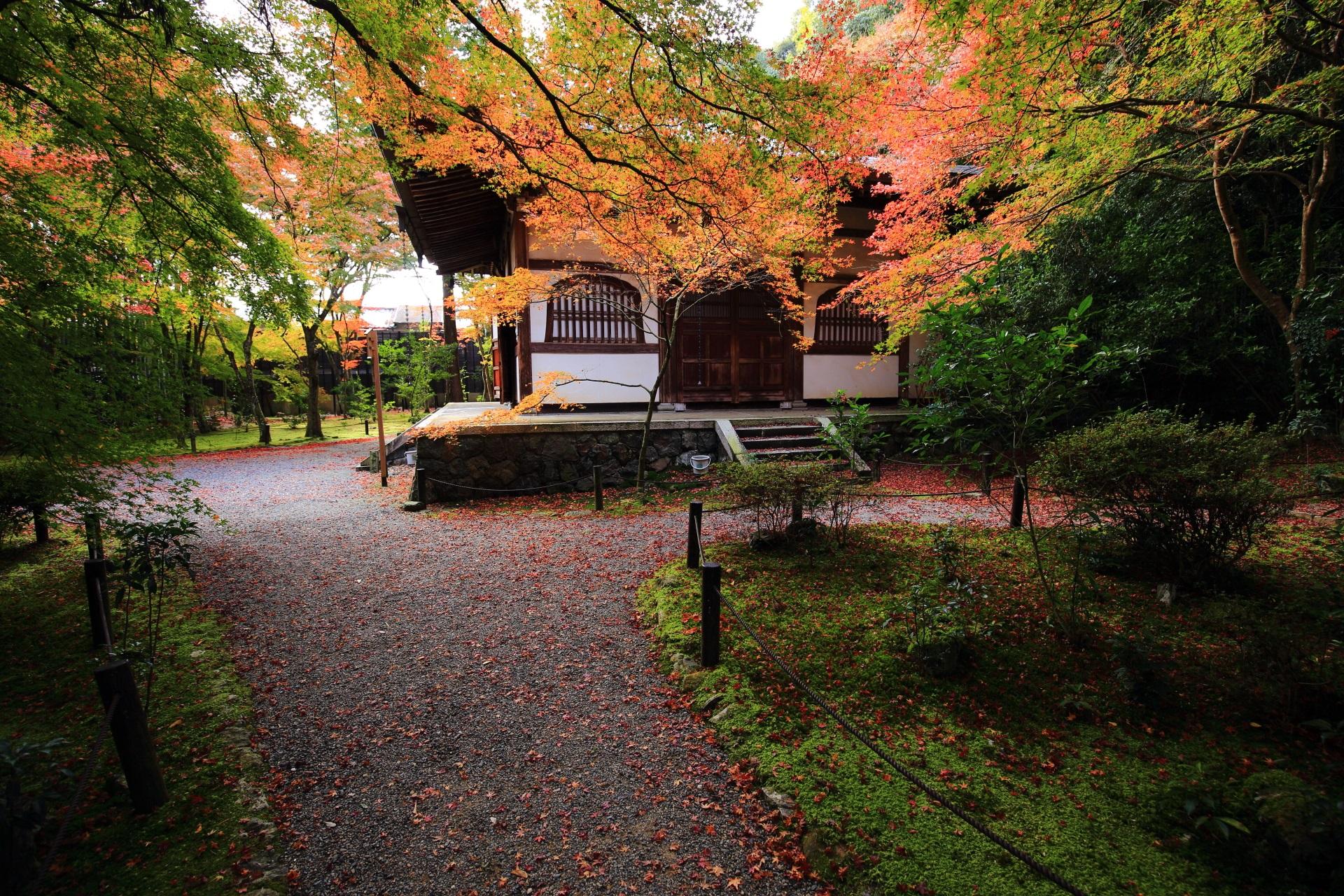 竹の寺の本堂に降り注ぐオレンジや緑のもみじ