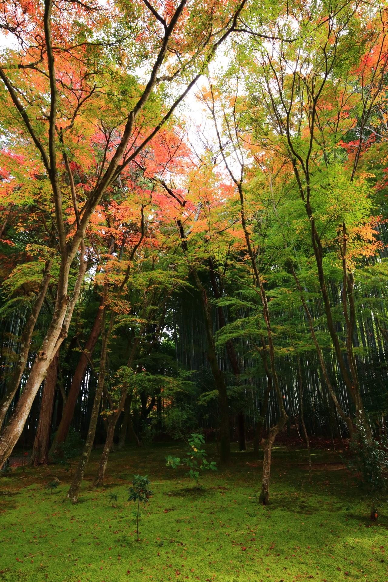 竹の寺地蔵院の本堂前の竹林と紅葉