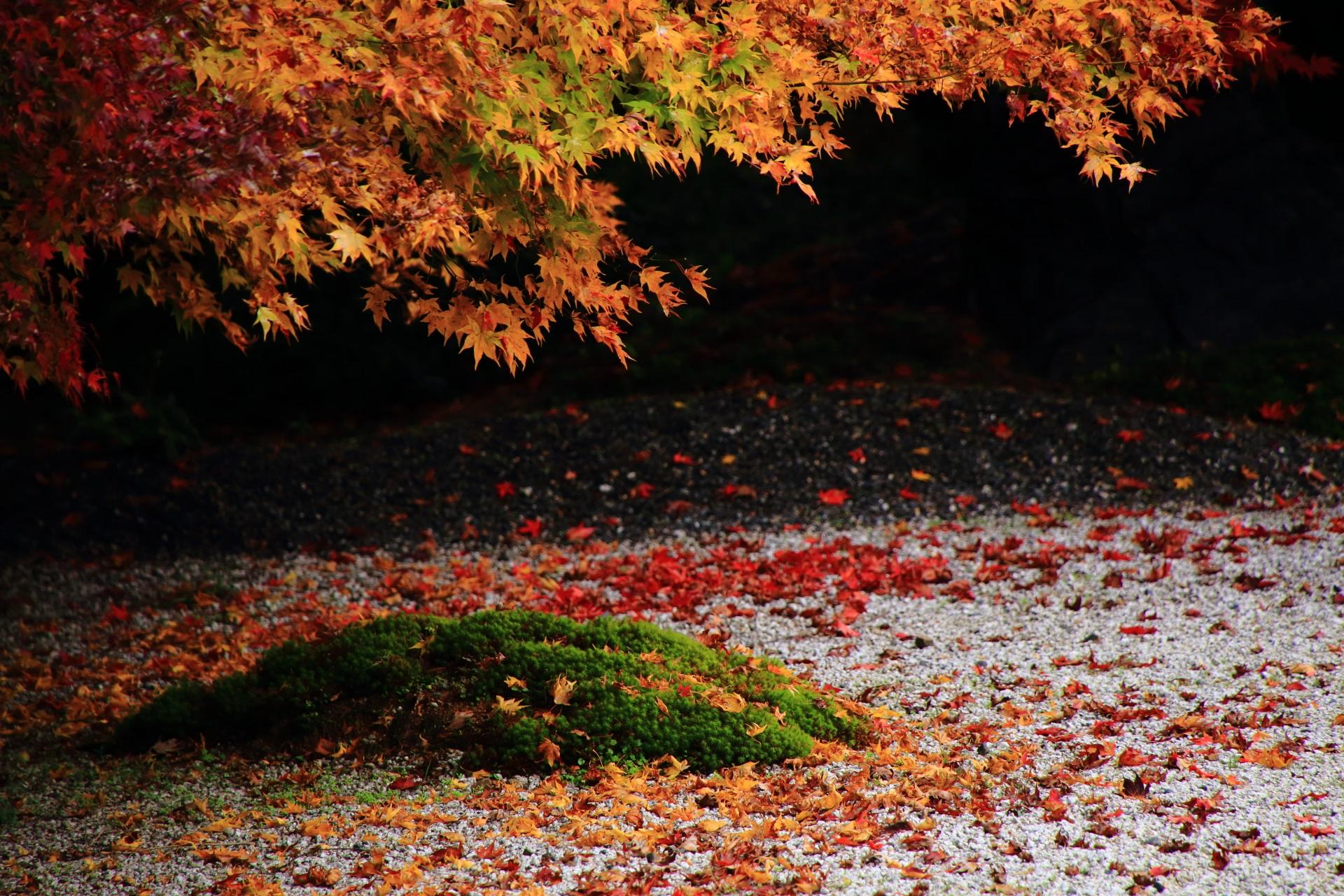 苔や白砂を染めるオレンジ系の散りもみじ