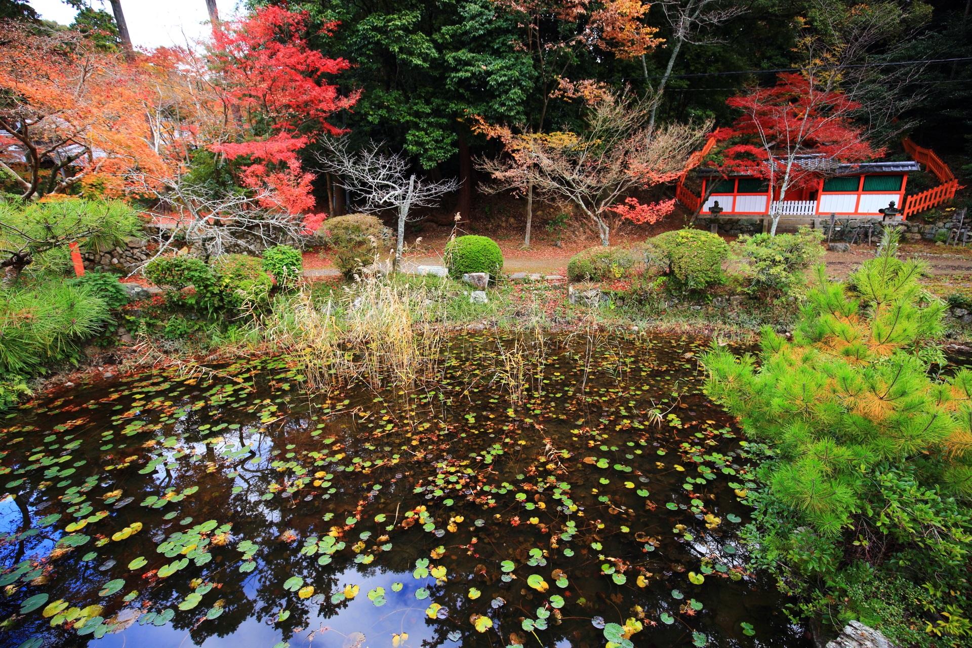 大原野神社の紅葉に彩られた若宮社