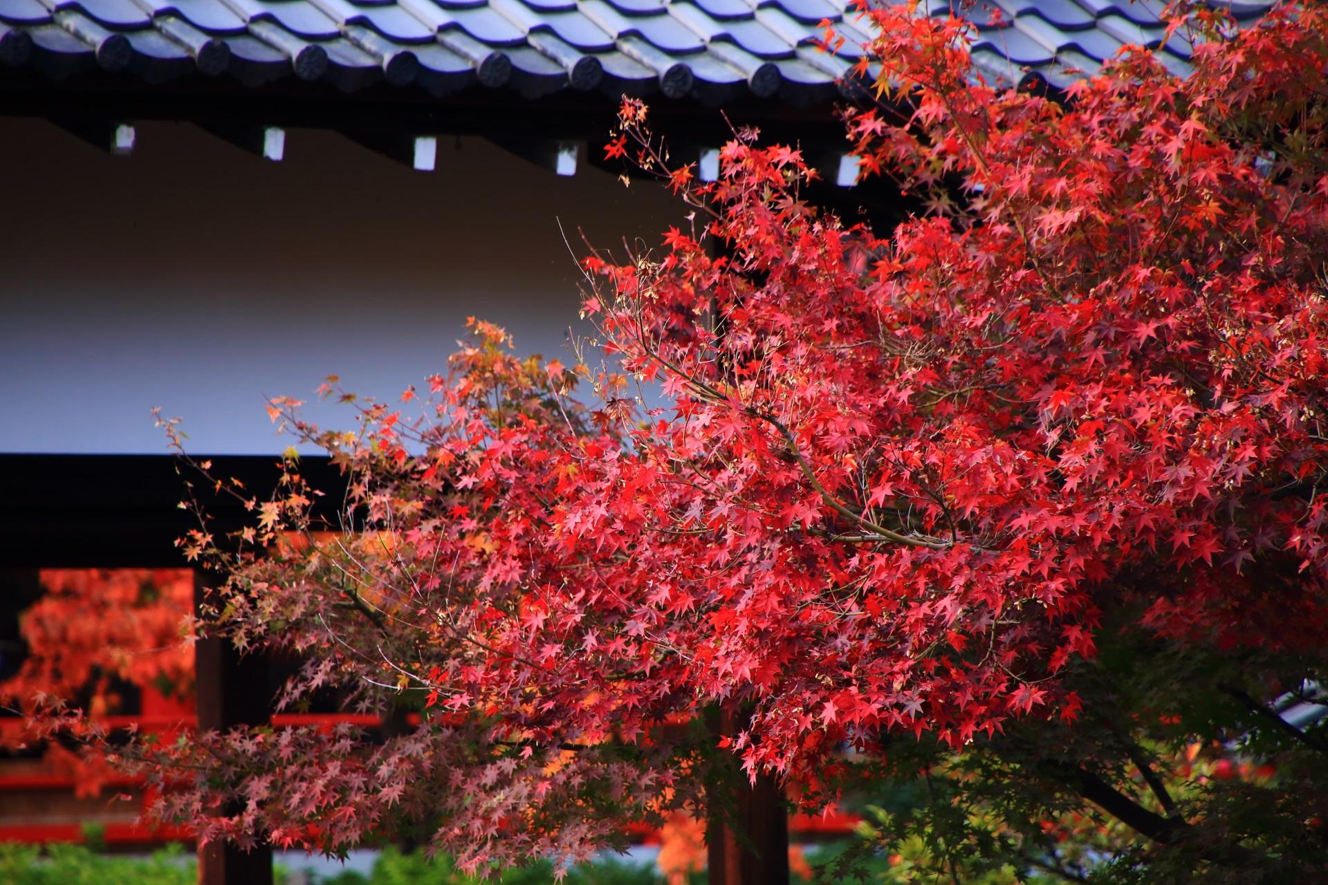 京都洛中の紅葉の隠れた名所の神泉苑