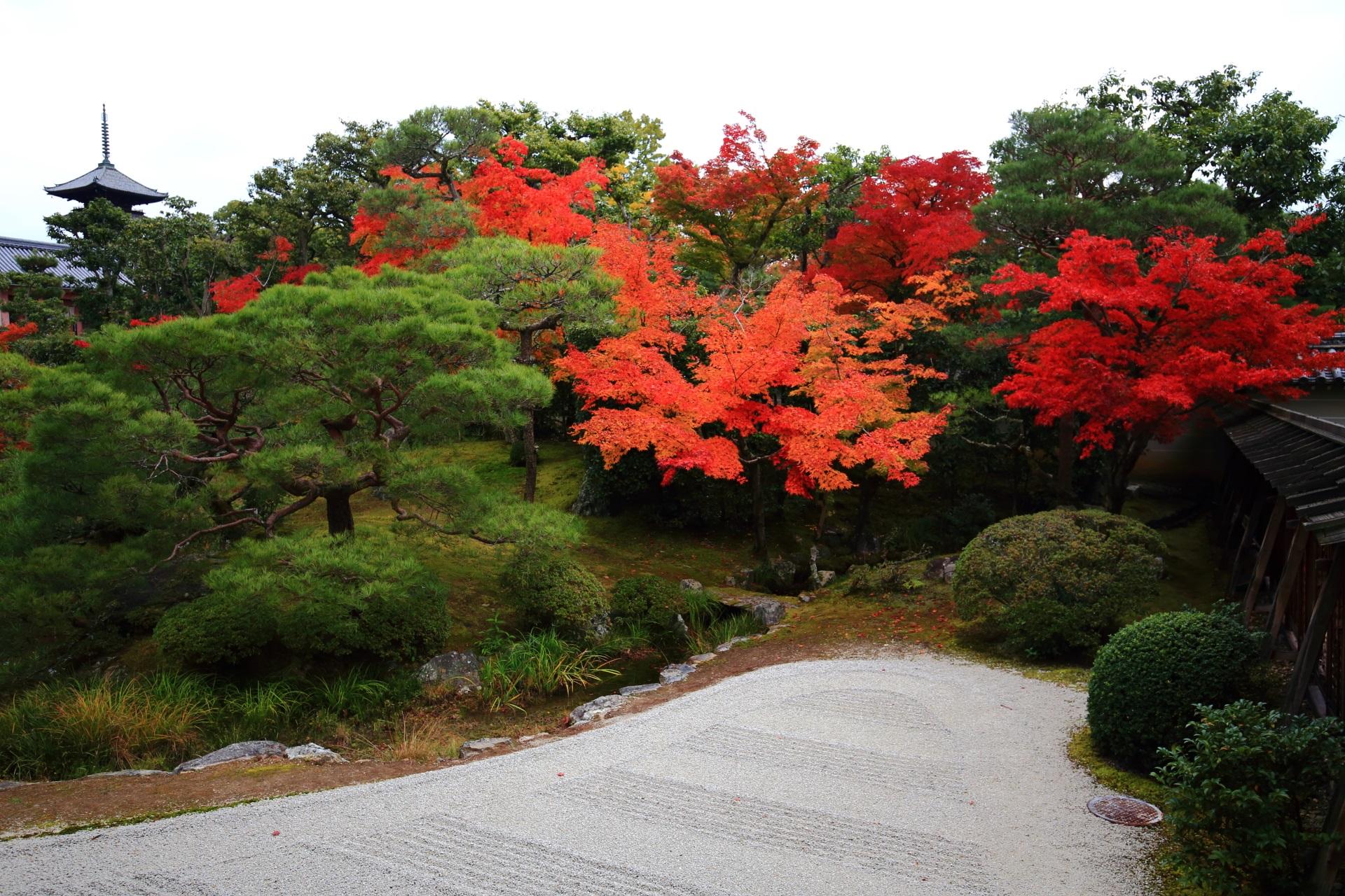 仁和寺の五重塔を彩る赤やオレンジの鮮やかな紅葉