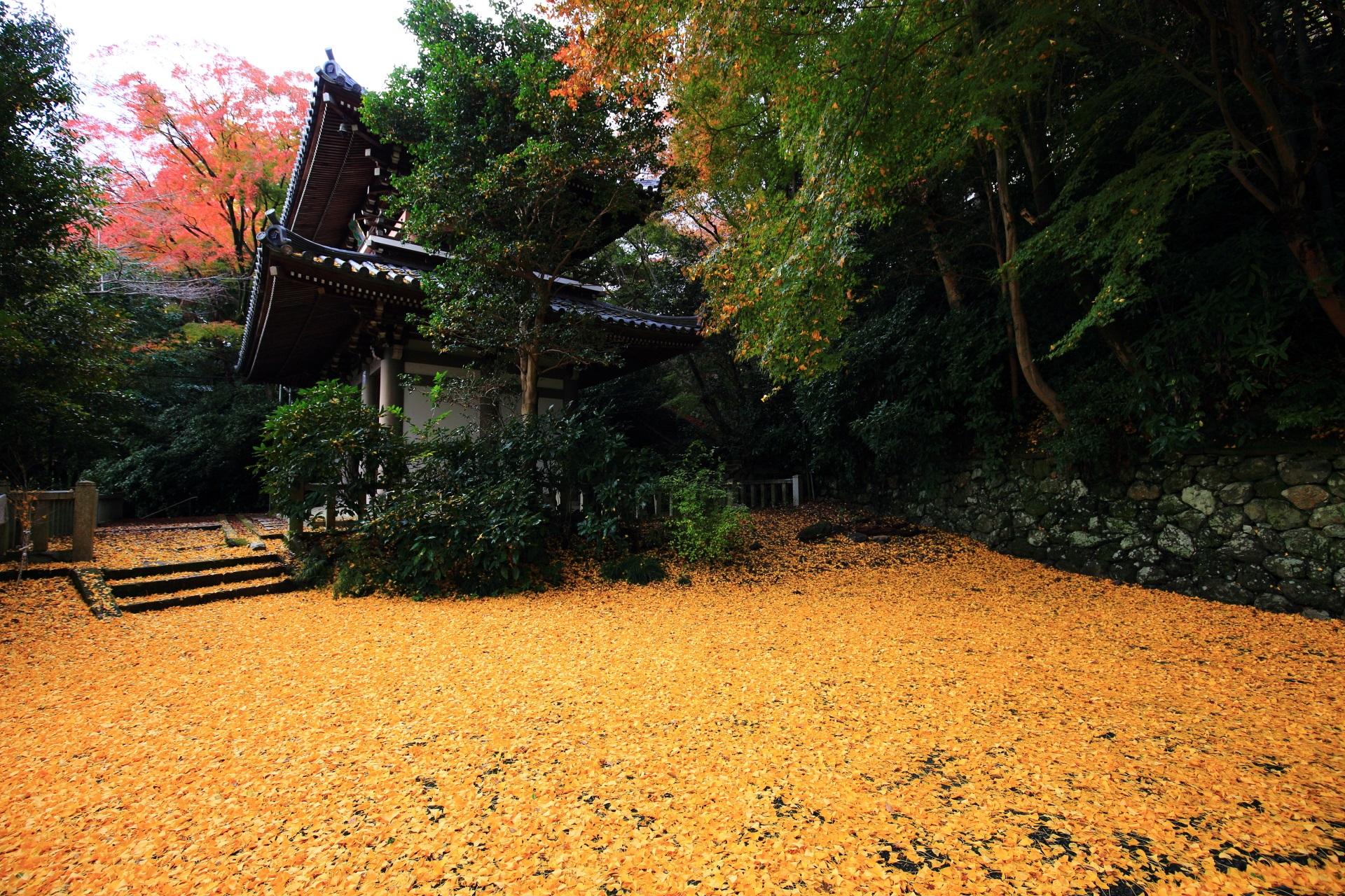 仁王門付近の見事な銀杏の絨毯