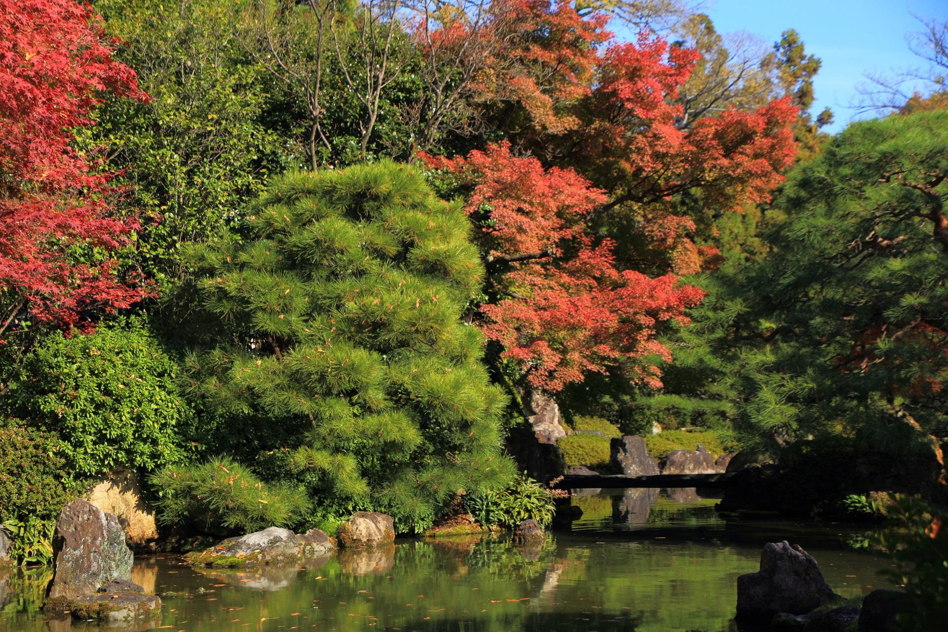 松の緑と紅葉の赤の綺麗なコントラスト