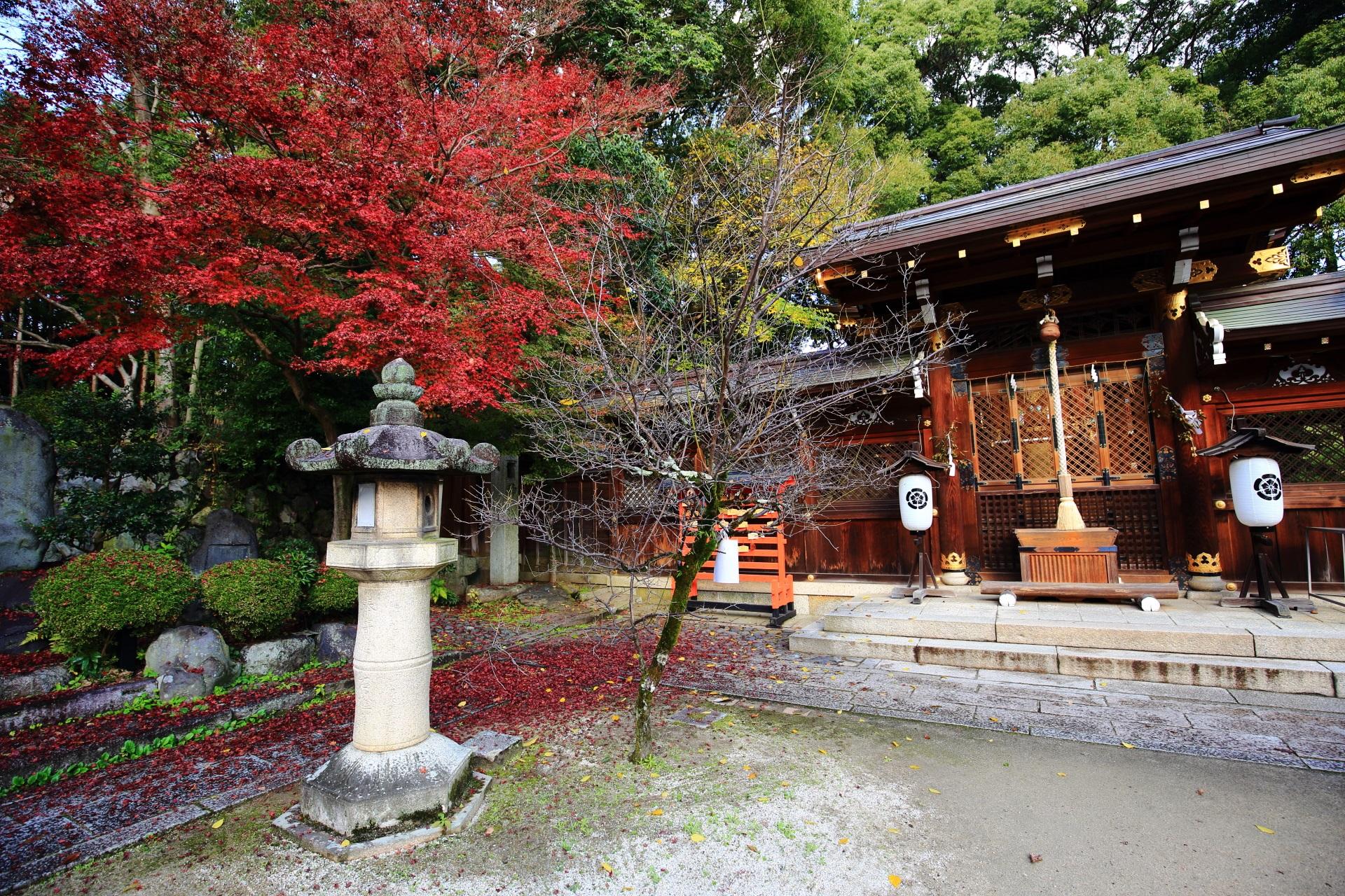 今宮神社の疫社と見事な色づきの鮮やかな紅葉