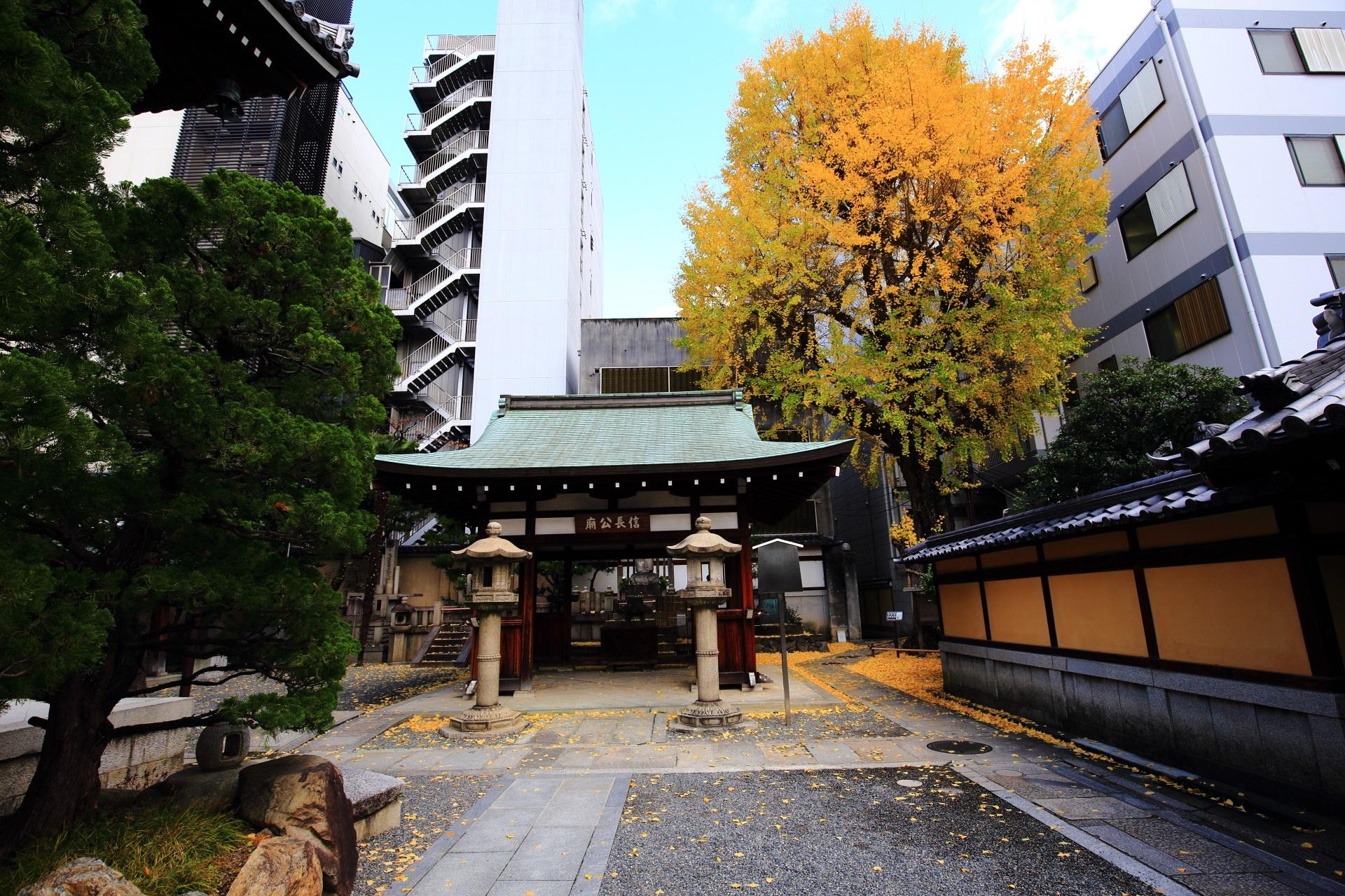 京都大火から人々や寺社を守ったという言い伝えがある大銀杏の「火伏せの銀杏」