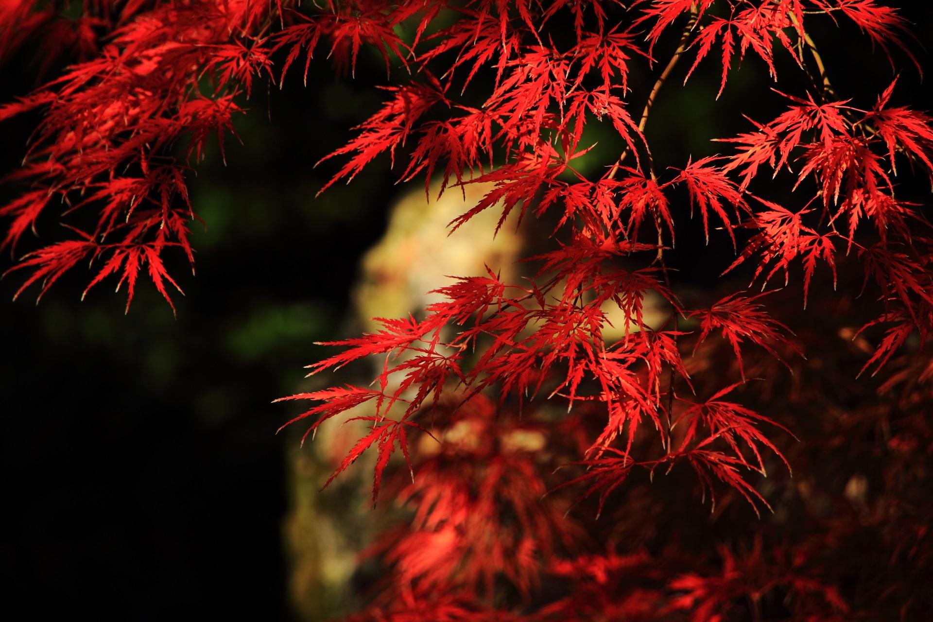 光と影が紅葉を演出する芸術のような秋の彩り