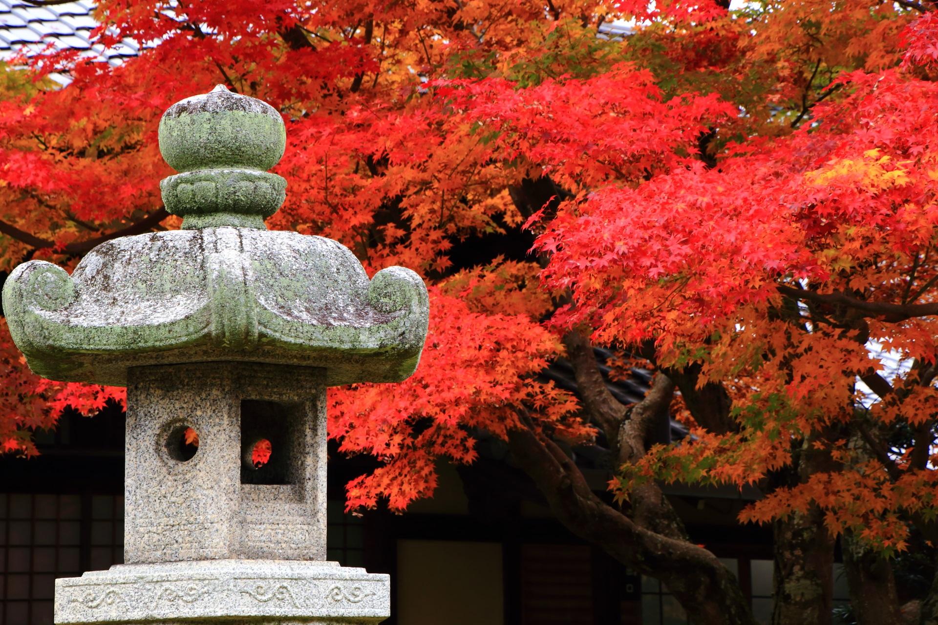 本堂前にある灯籠と紅葉