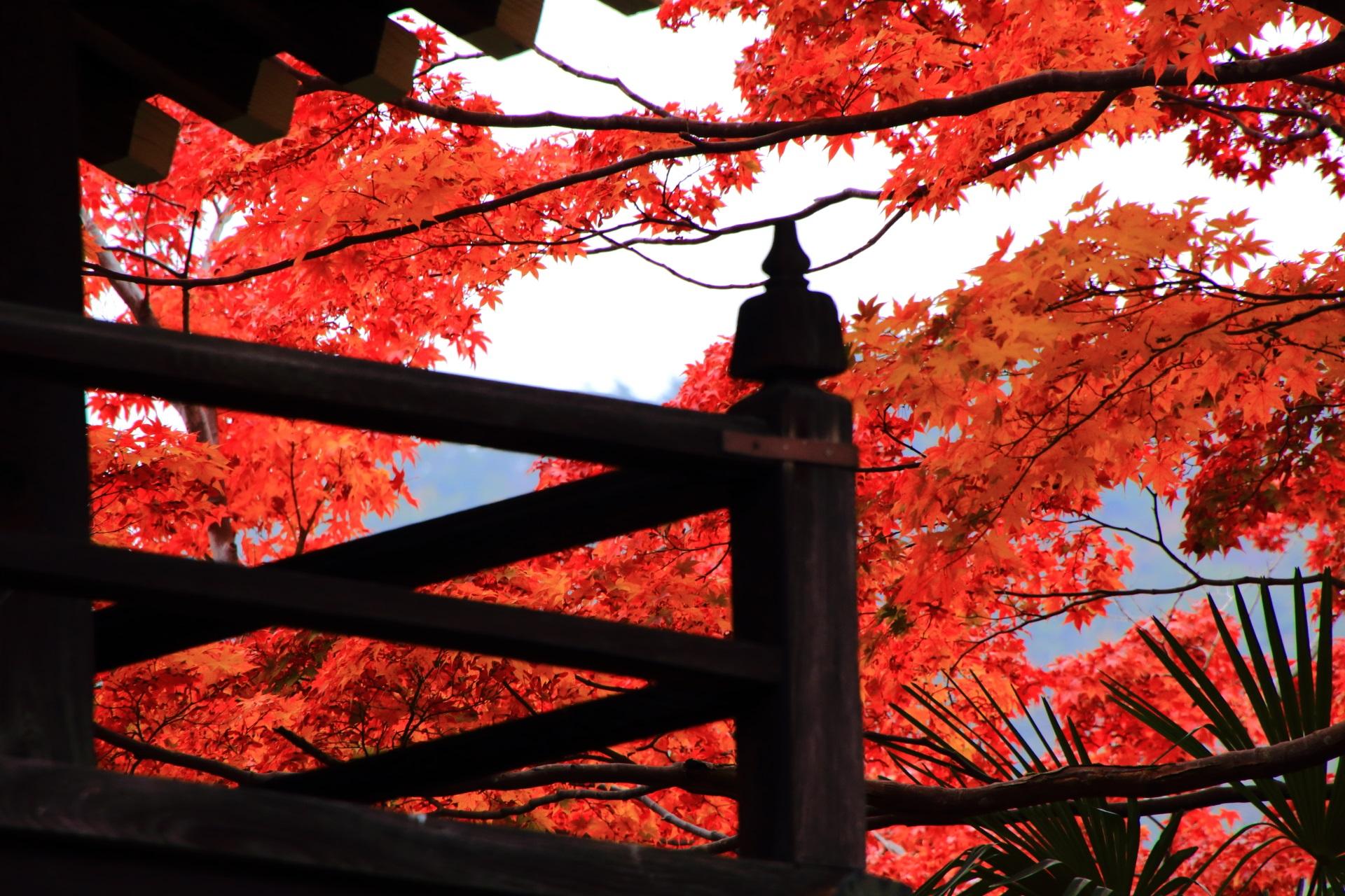 源光庵の山門の欄干から見える絵になる紅葉