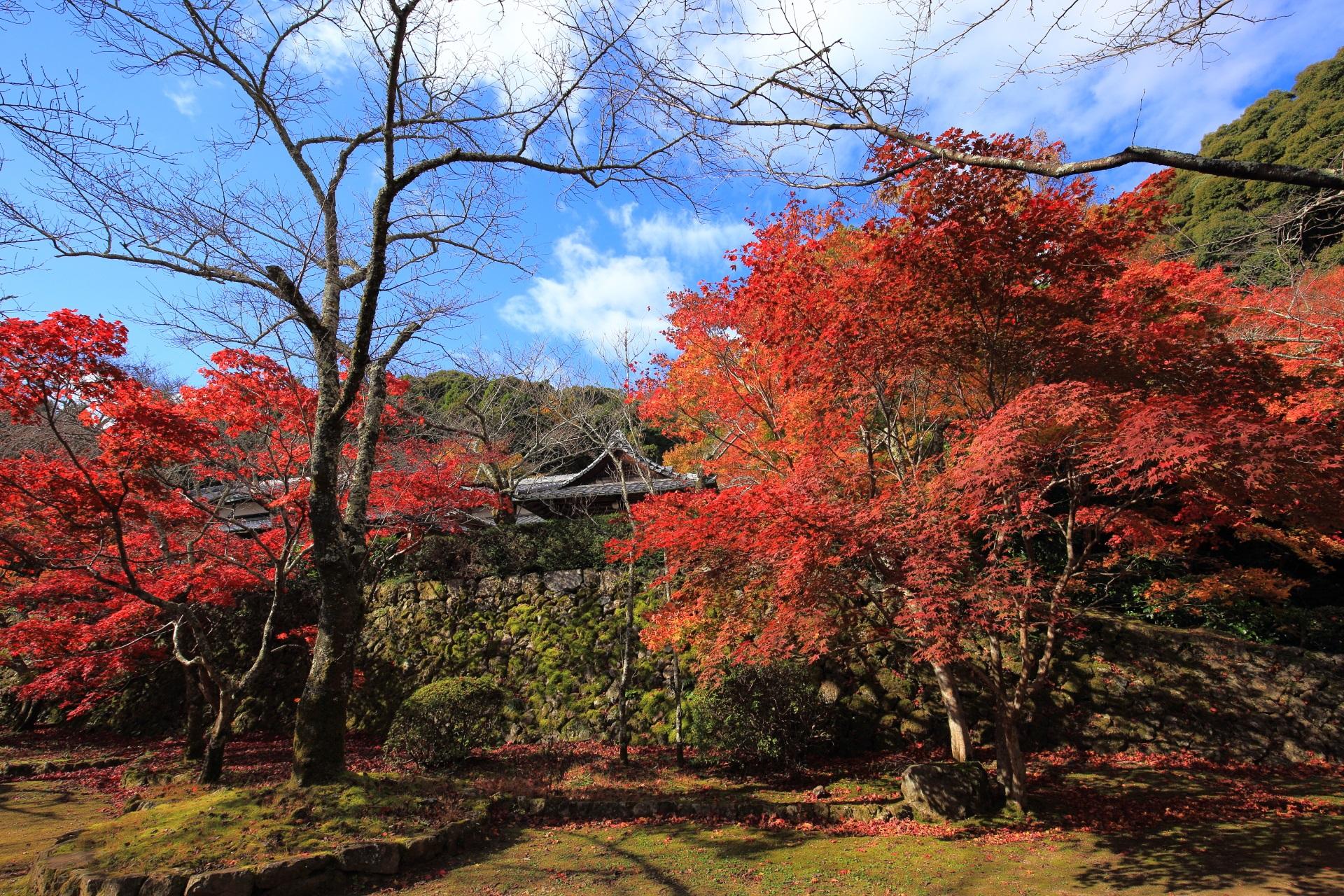 勝持寺の境内(庭園)の奥の方にある「桜ヶ丘」の紅葉