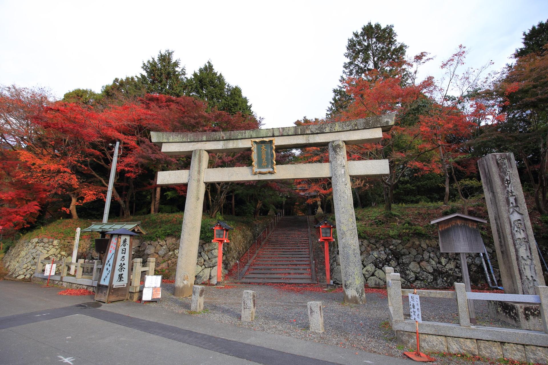 濃く色づいた紅葉が華やぐ大原野神社の一ノ鳥居
