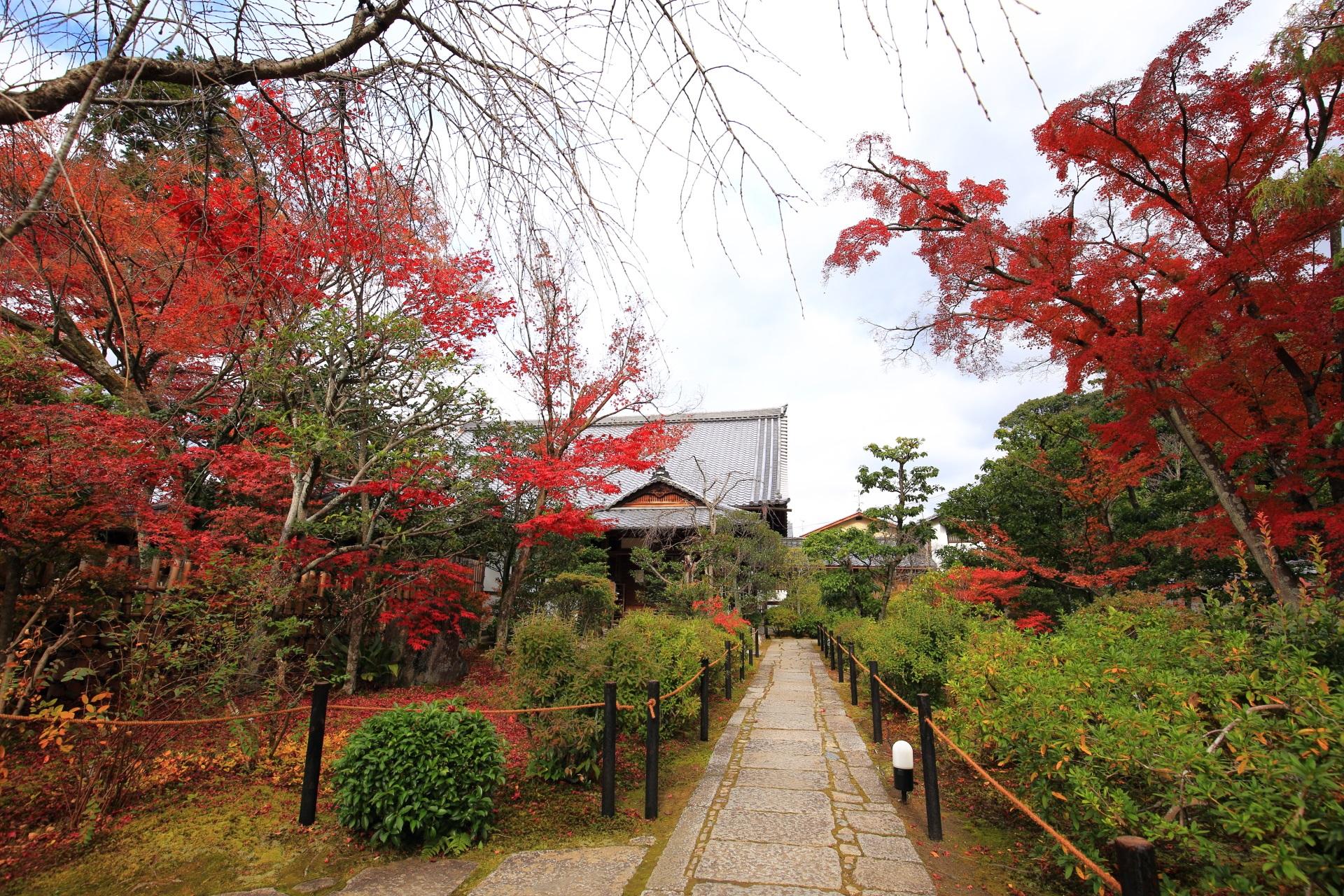 妙心寺大法院の参道の紅葉