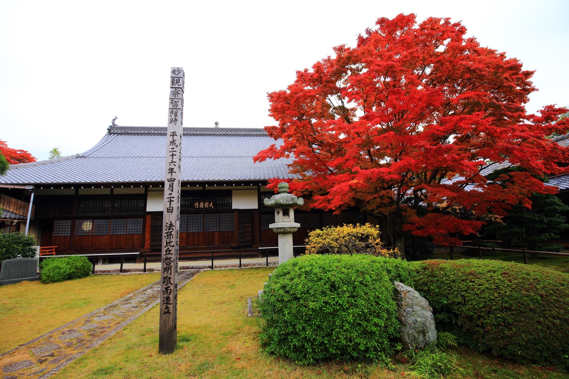 源光庵の本堂と最高の見ごろをむかえた丸く大きな紅葉