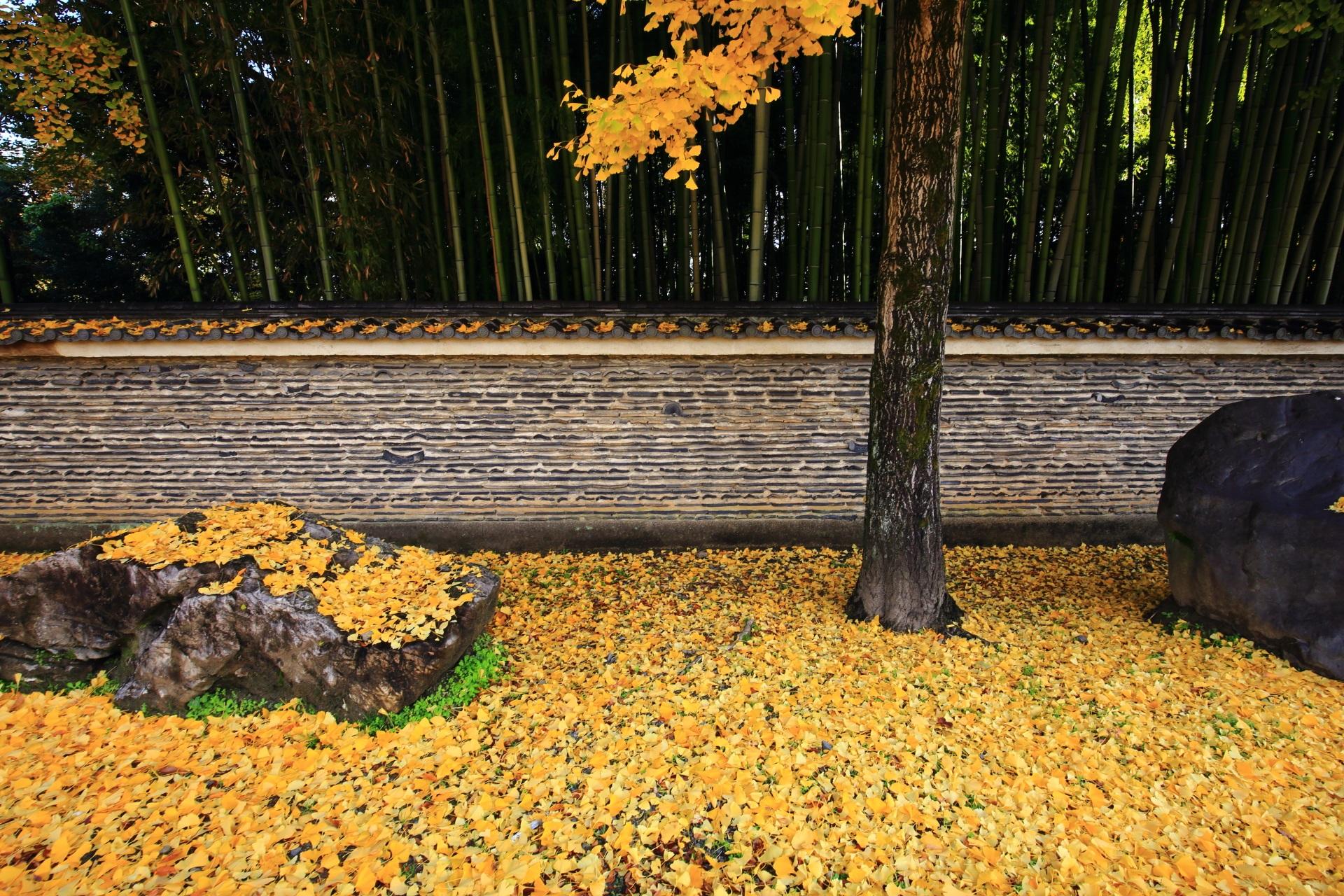 背景の土塀と竹林が演出する圧巻の散り銀杏
