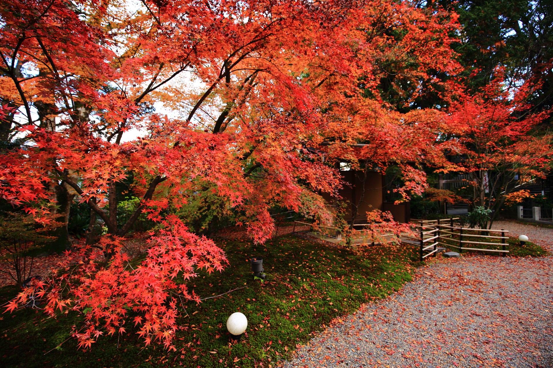 長岡天満宮 紅葉 錦色にそまる紅葉の隠れた名所