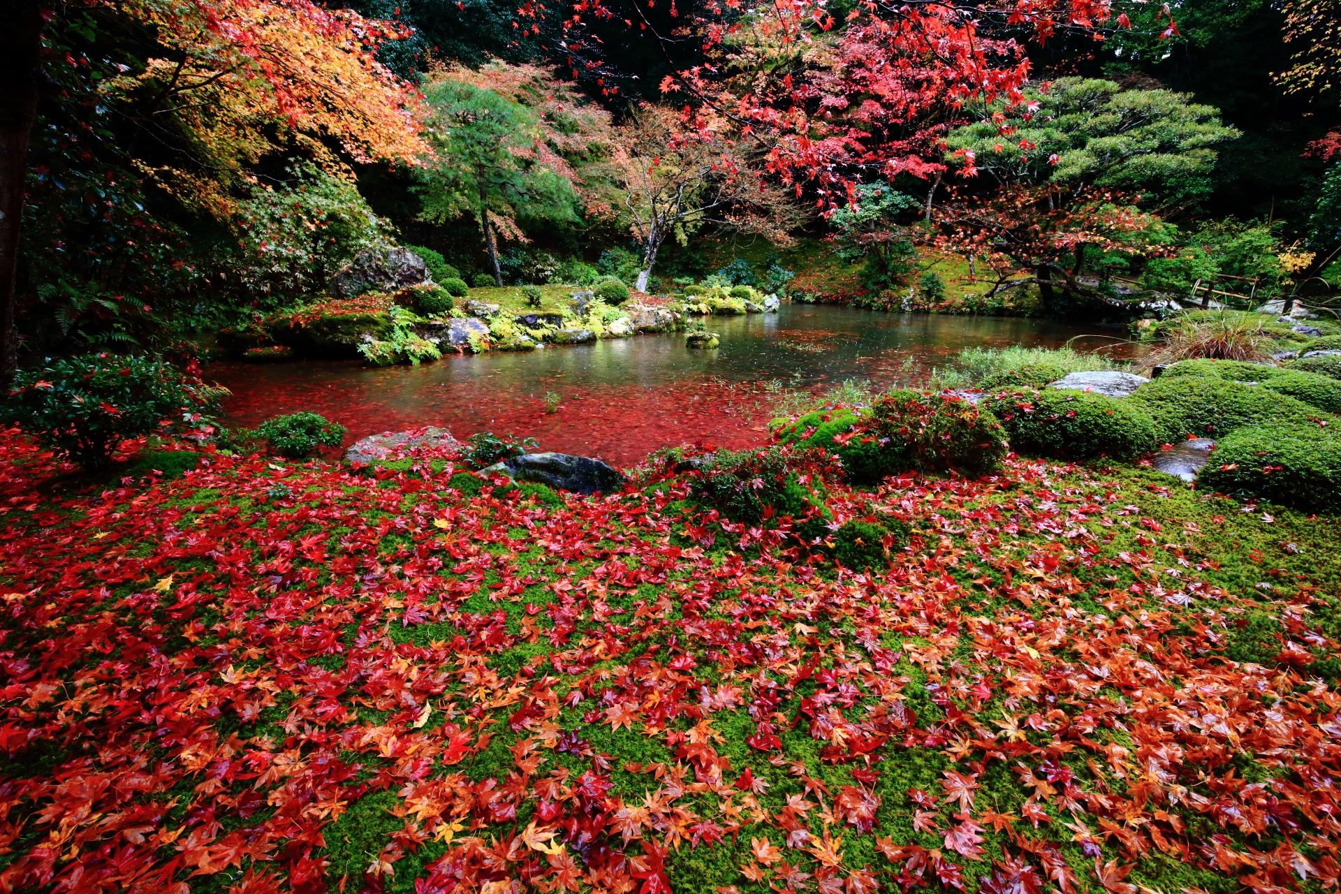 南禅院 紅葉と散りもみじ 水辺と苔を彩る絶品の秋色