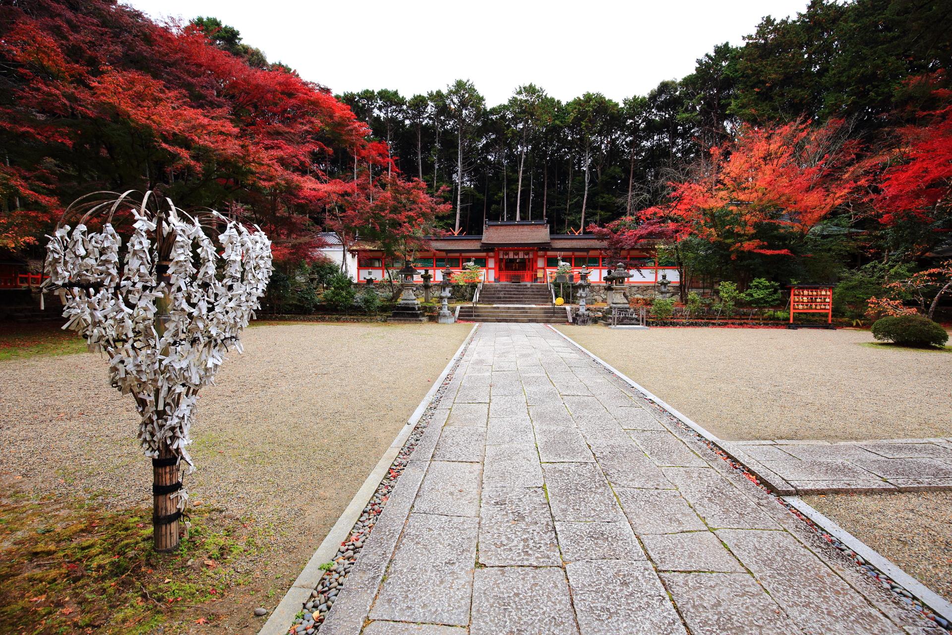 色とりどりの鮮やかな紅葉