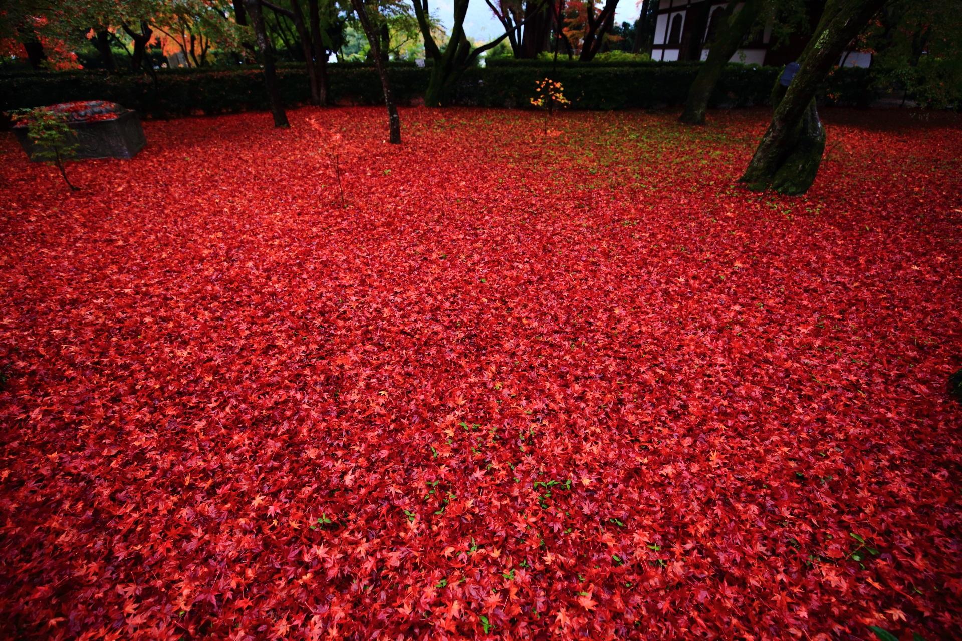 真如堂 散り紅葉
