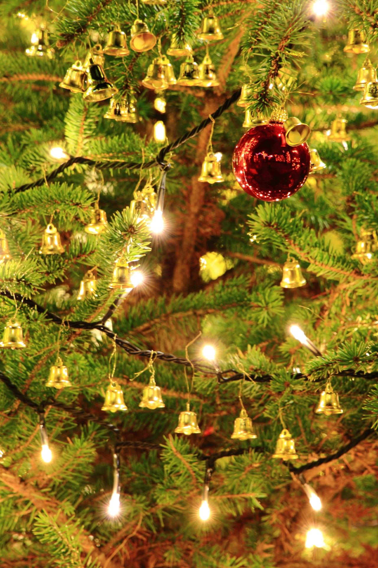 イルミネーションの施されたクリスマスツリー