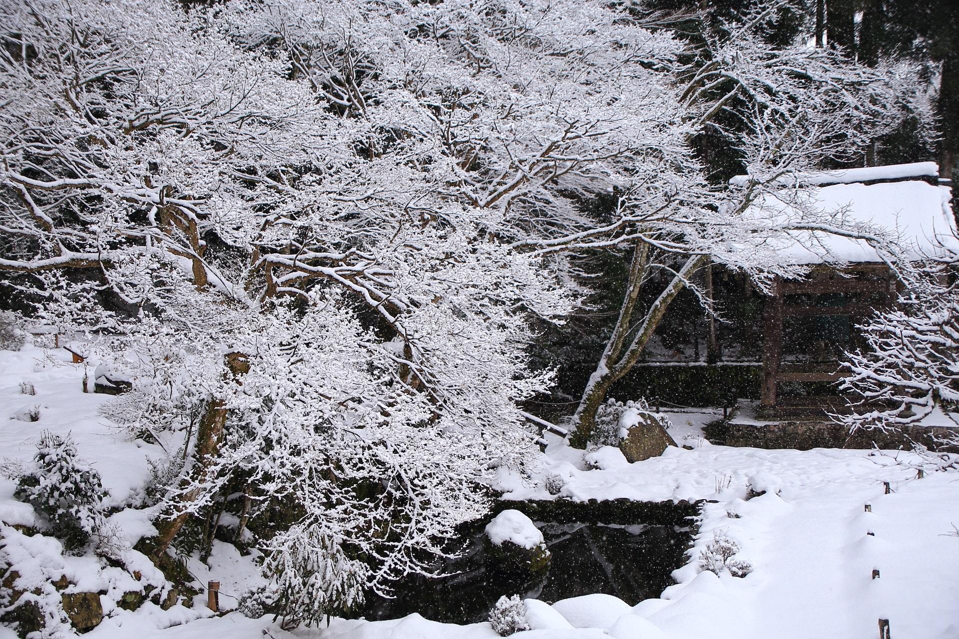 高画質 勝林院 冬 写真