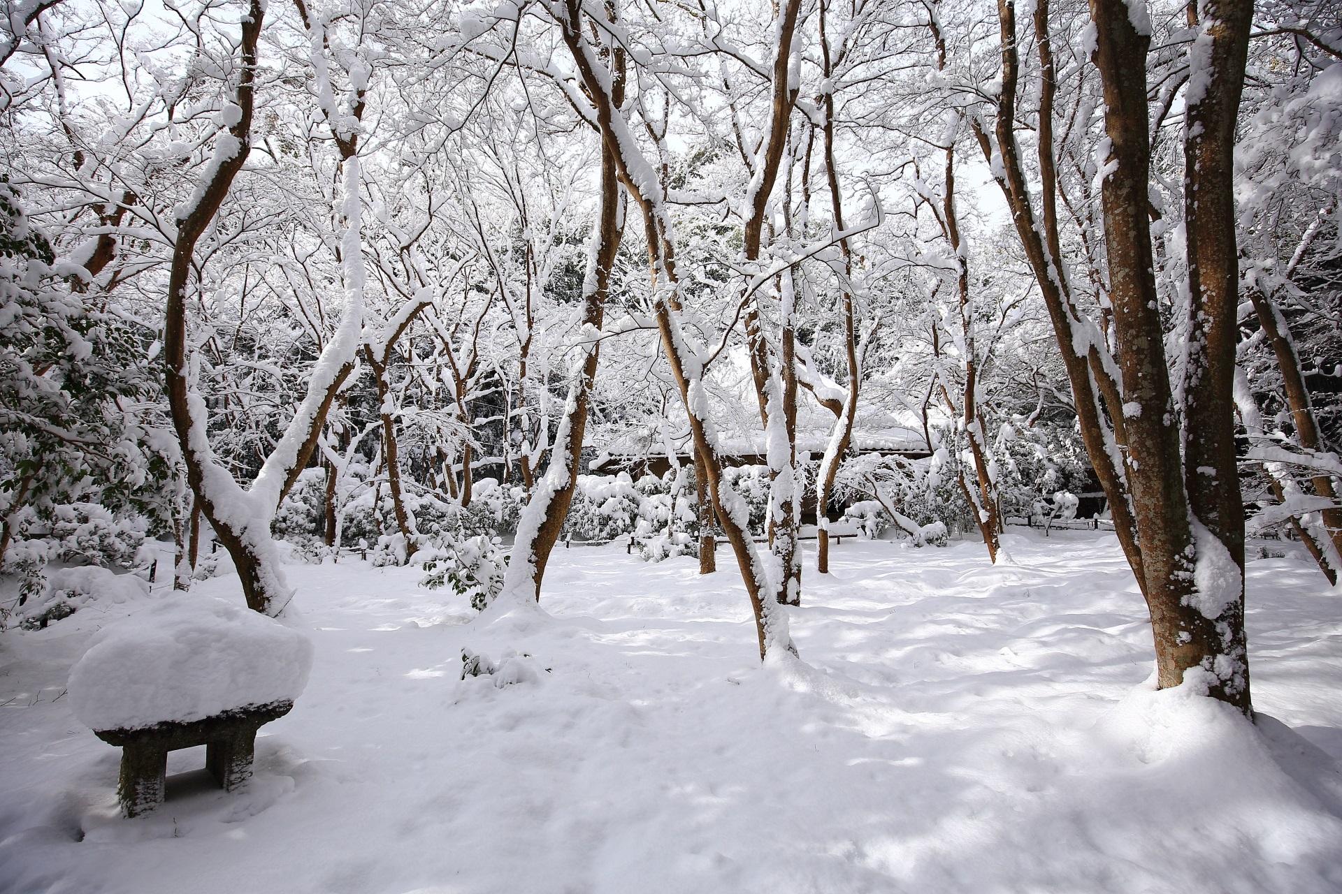 雰囲気が異なる雪の祇王寺