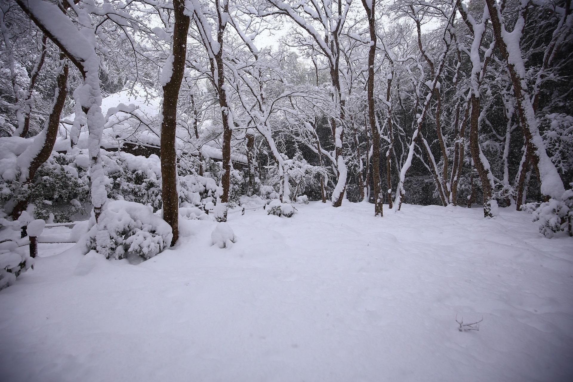 祇王寺の苔庭の雪景色