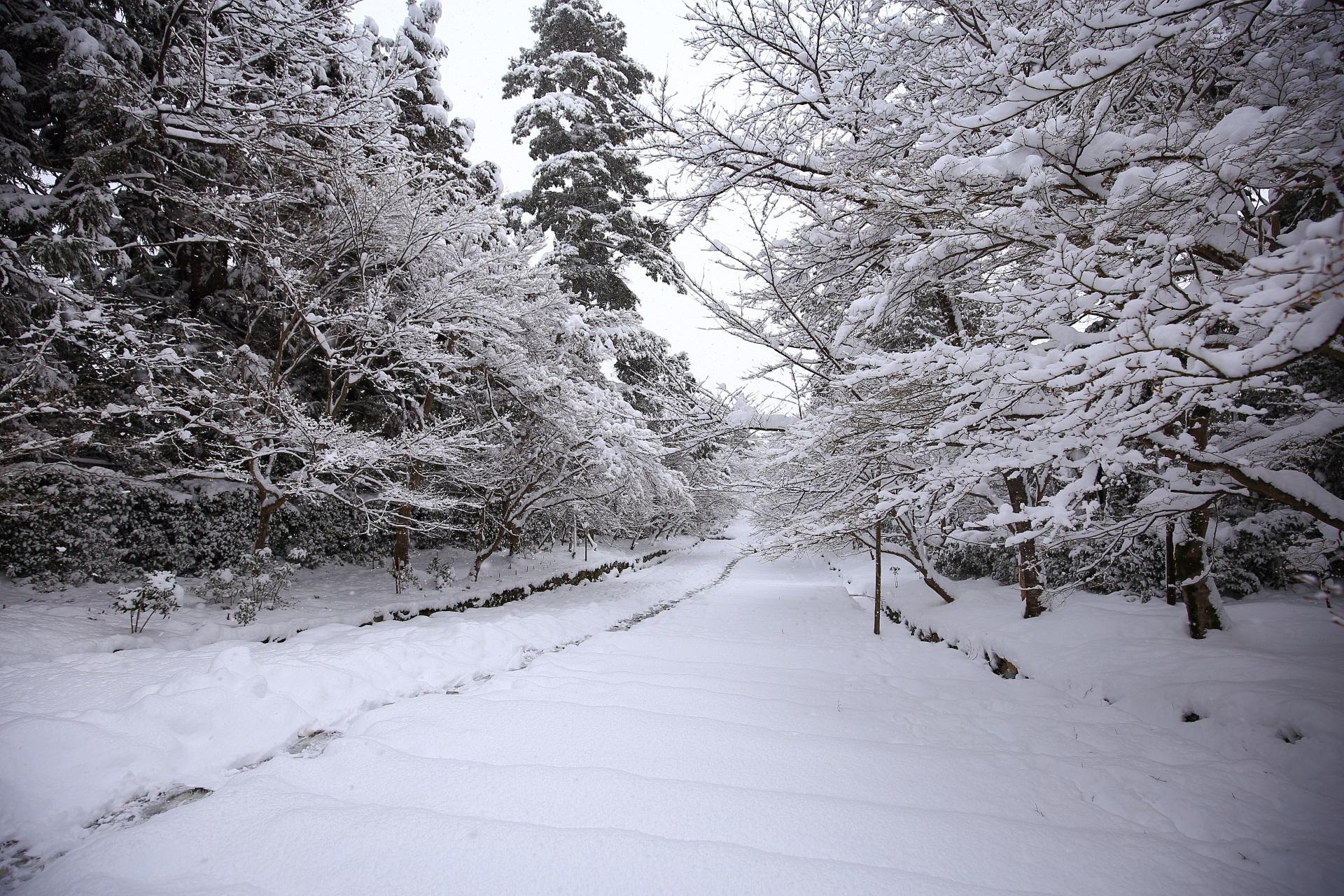 二尊院 高画質 雪景色 写真