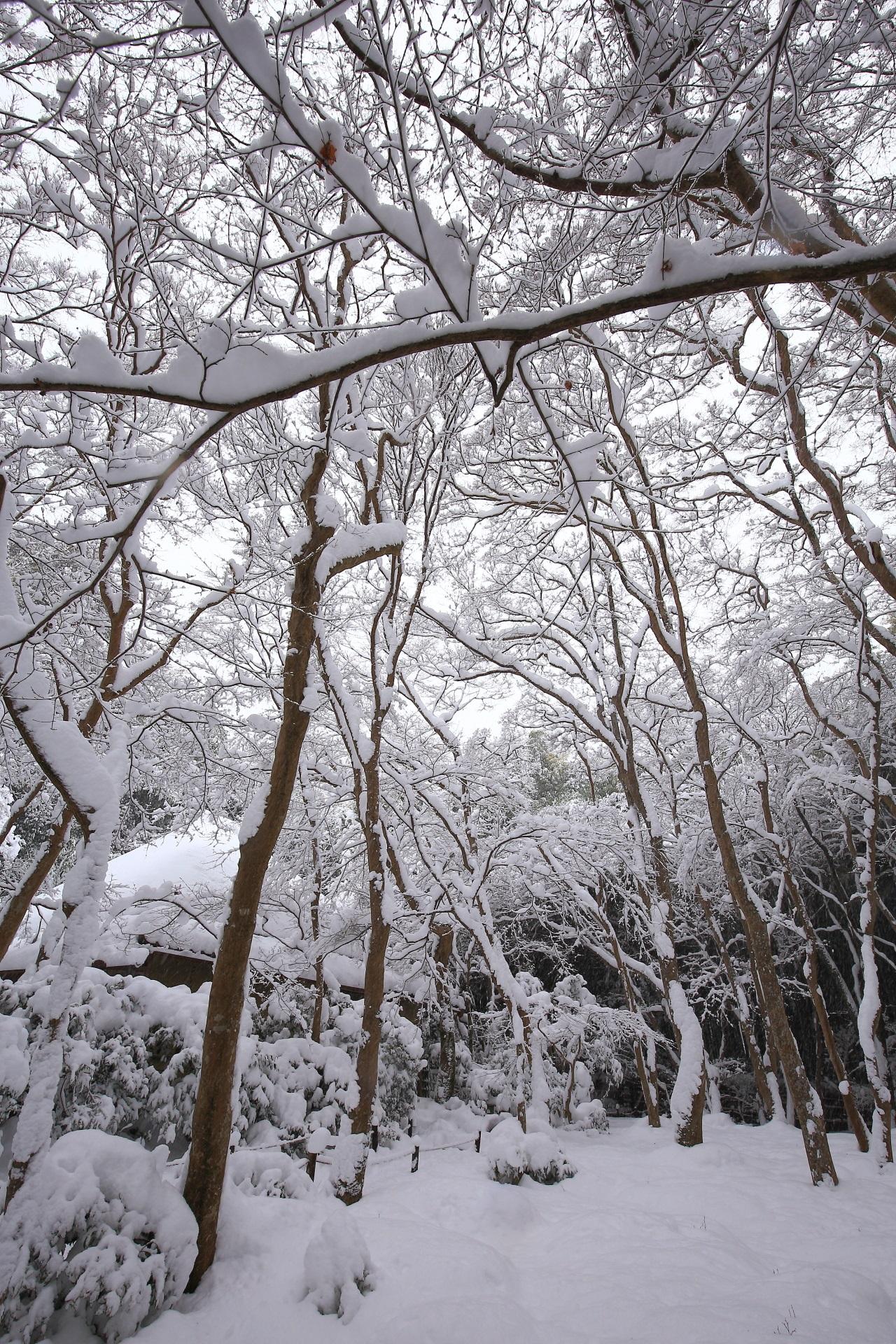 Kyoto Gio-ji Temple snowy landscape