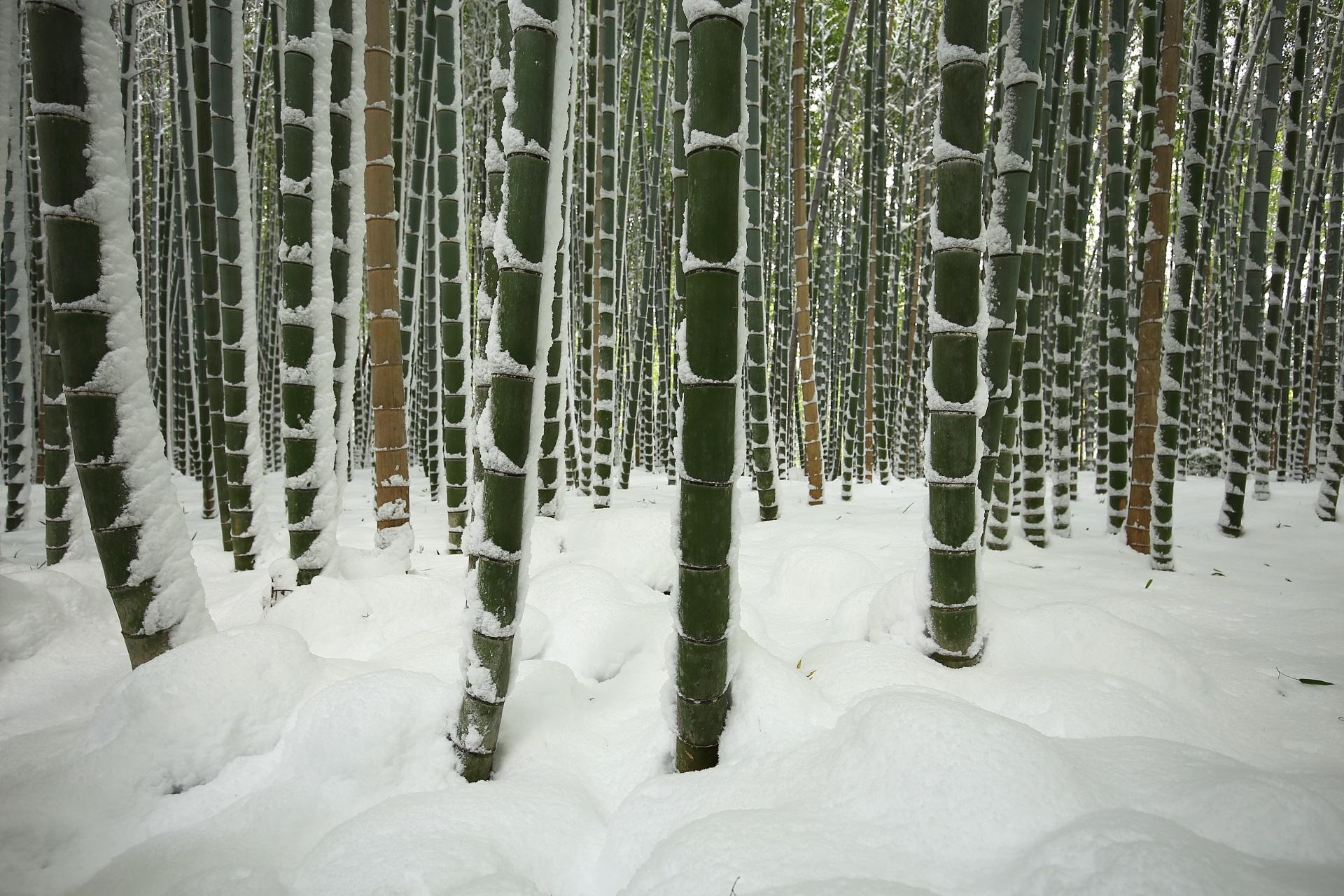 竹の下にもいっぱい雪が積もる竹林の道