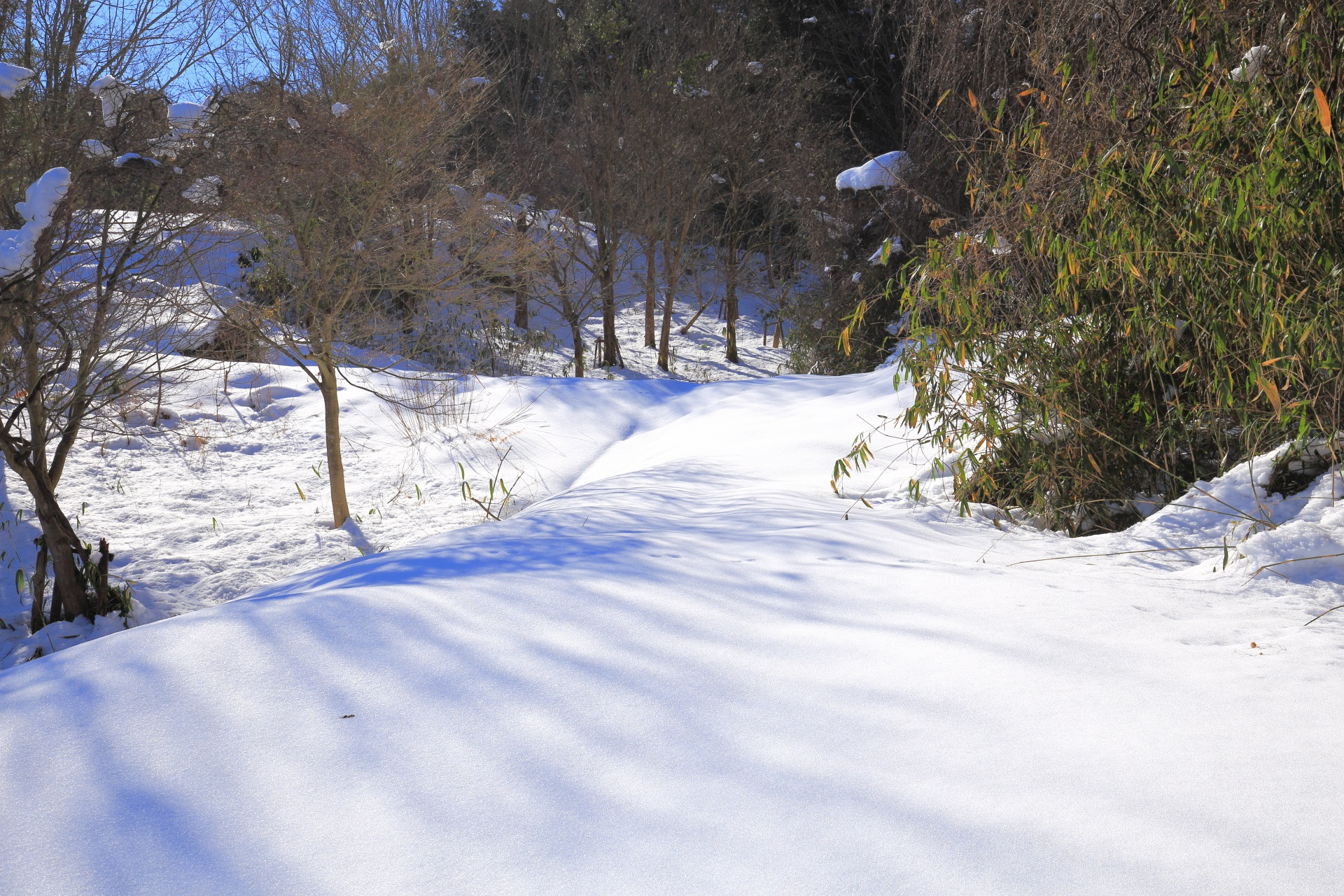 雪の安寿の里もみじ公園