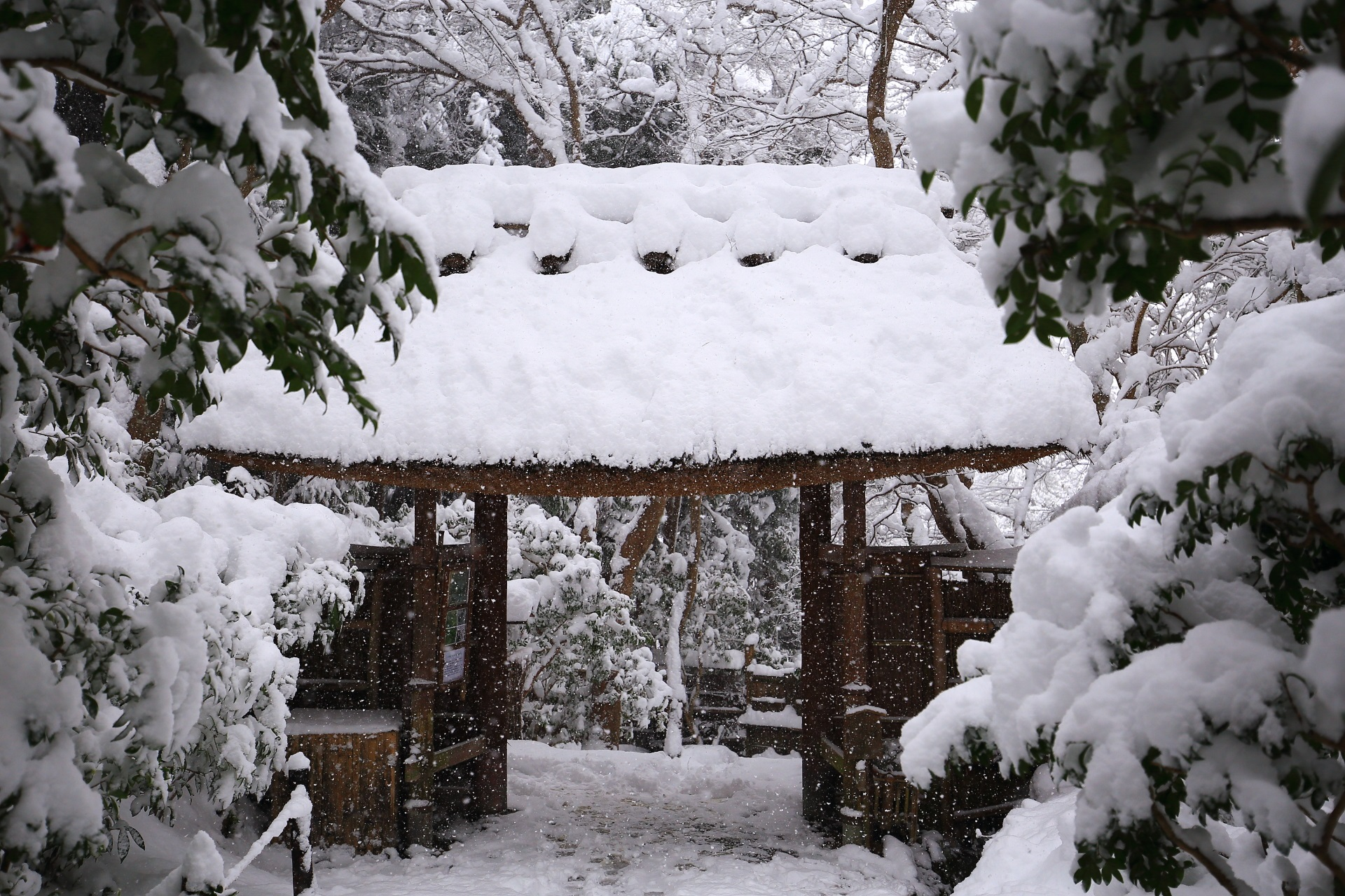 雪化粧した祇王寺の茅葺屋根の門