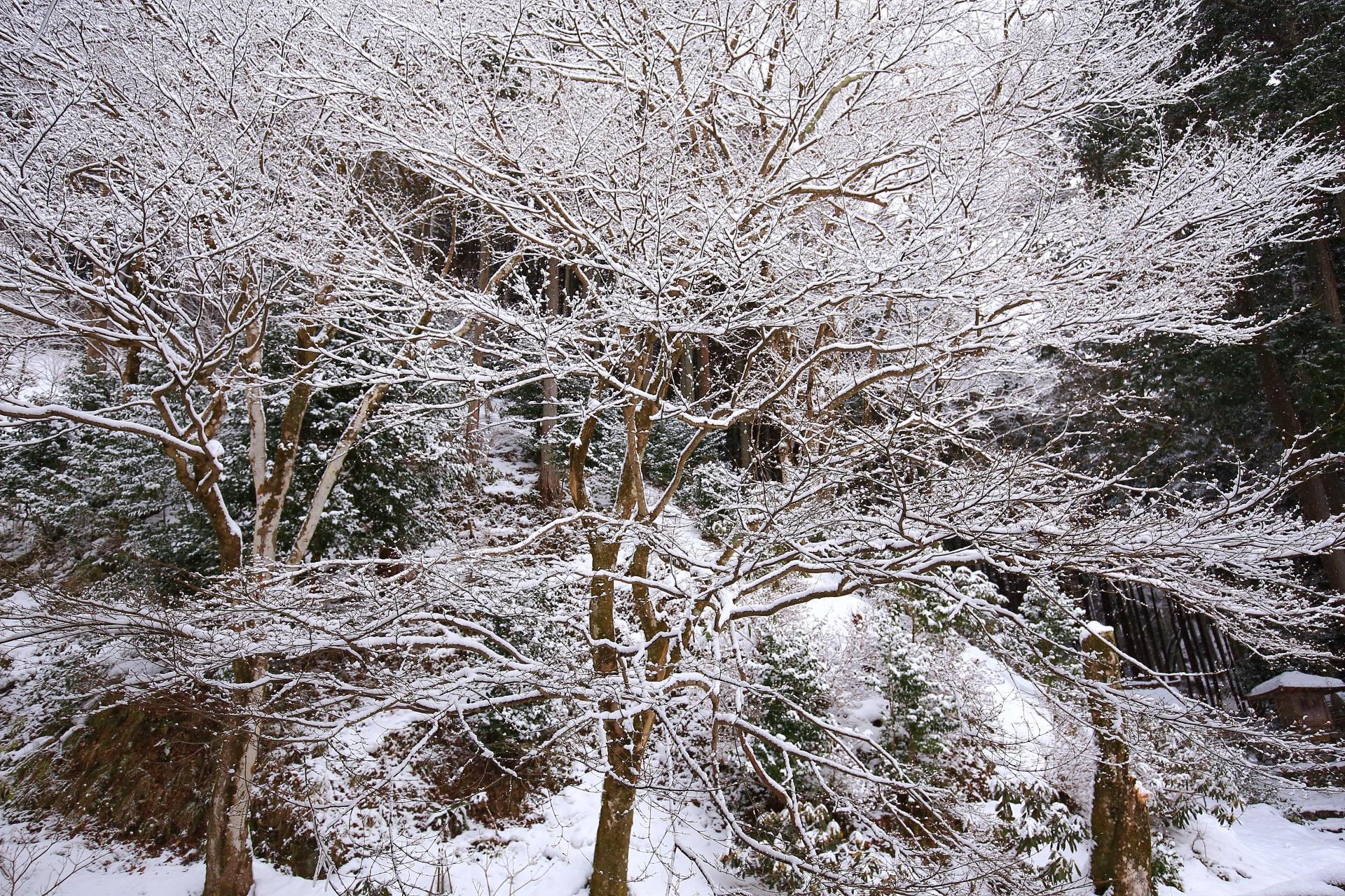 雪景色 高画質 写真 勝林院
