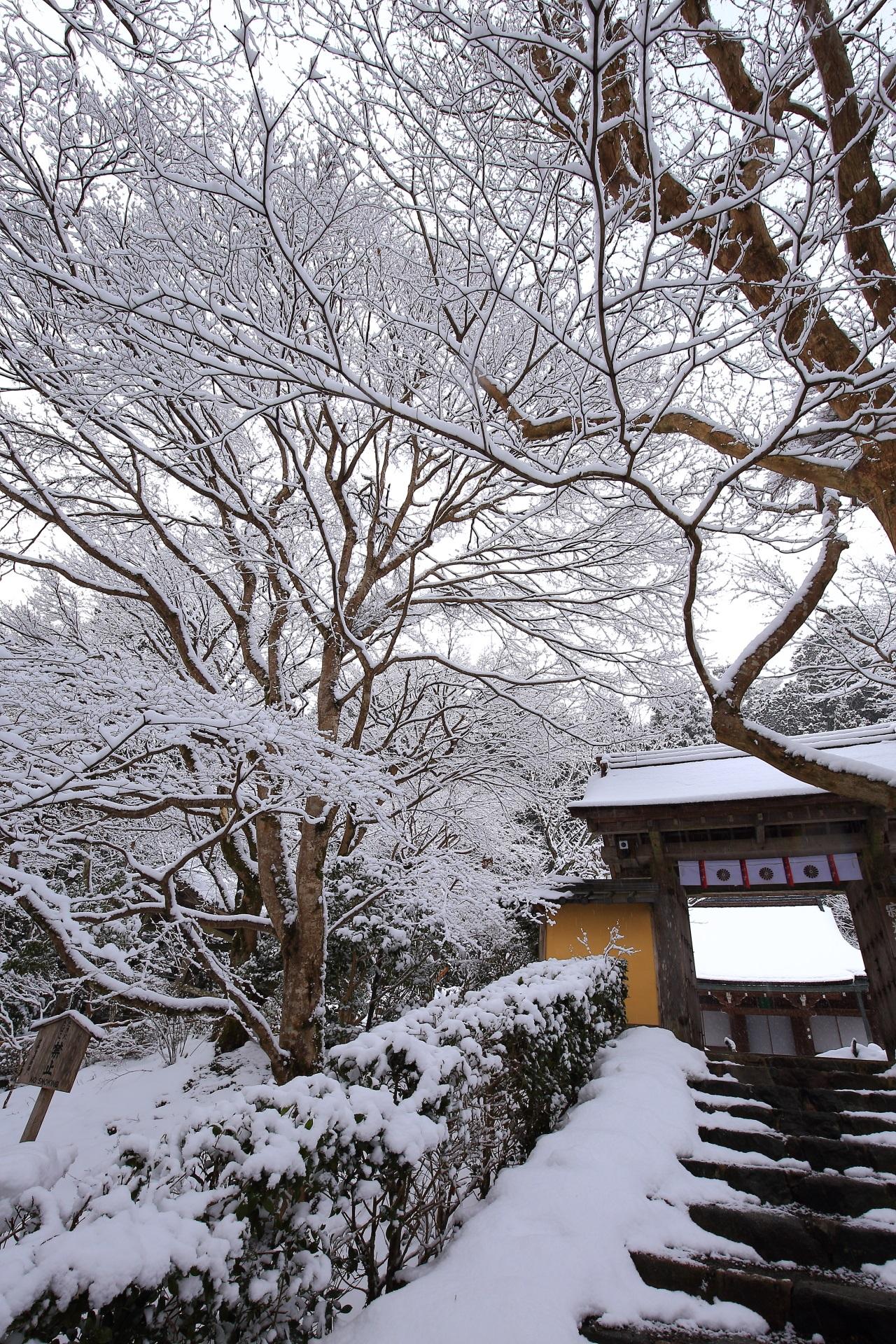 雪の花が咲く冬の寂光院