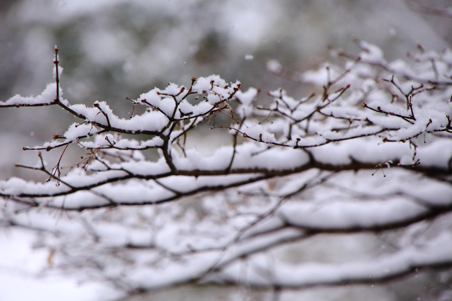 三千院の華やかな雪の花