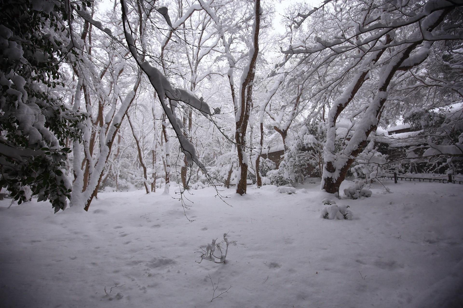 高画質 写真 祇王寺 雪景色
