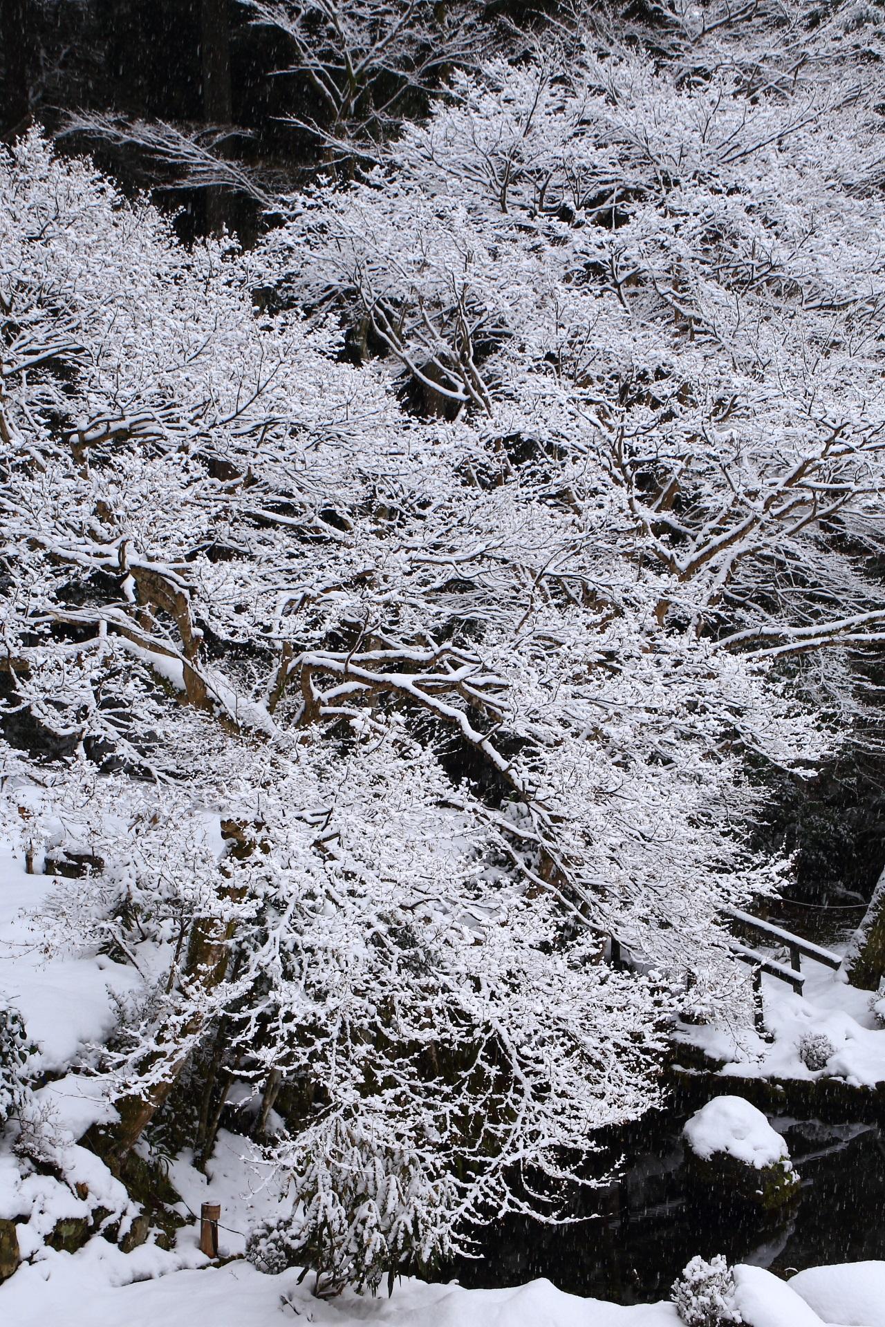 Kyoto Ohara Syorin-in Temple snowy landscape