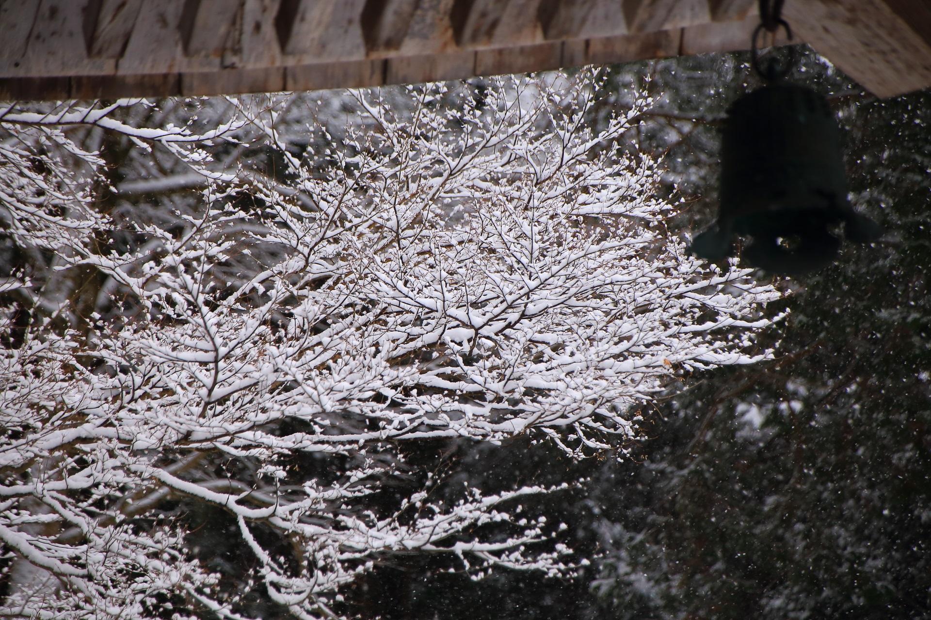 庇の下に咲く見事な雪の花