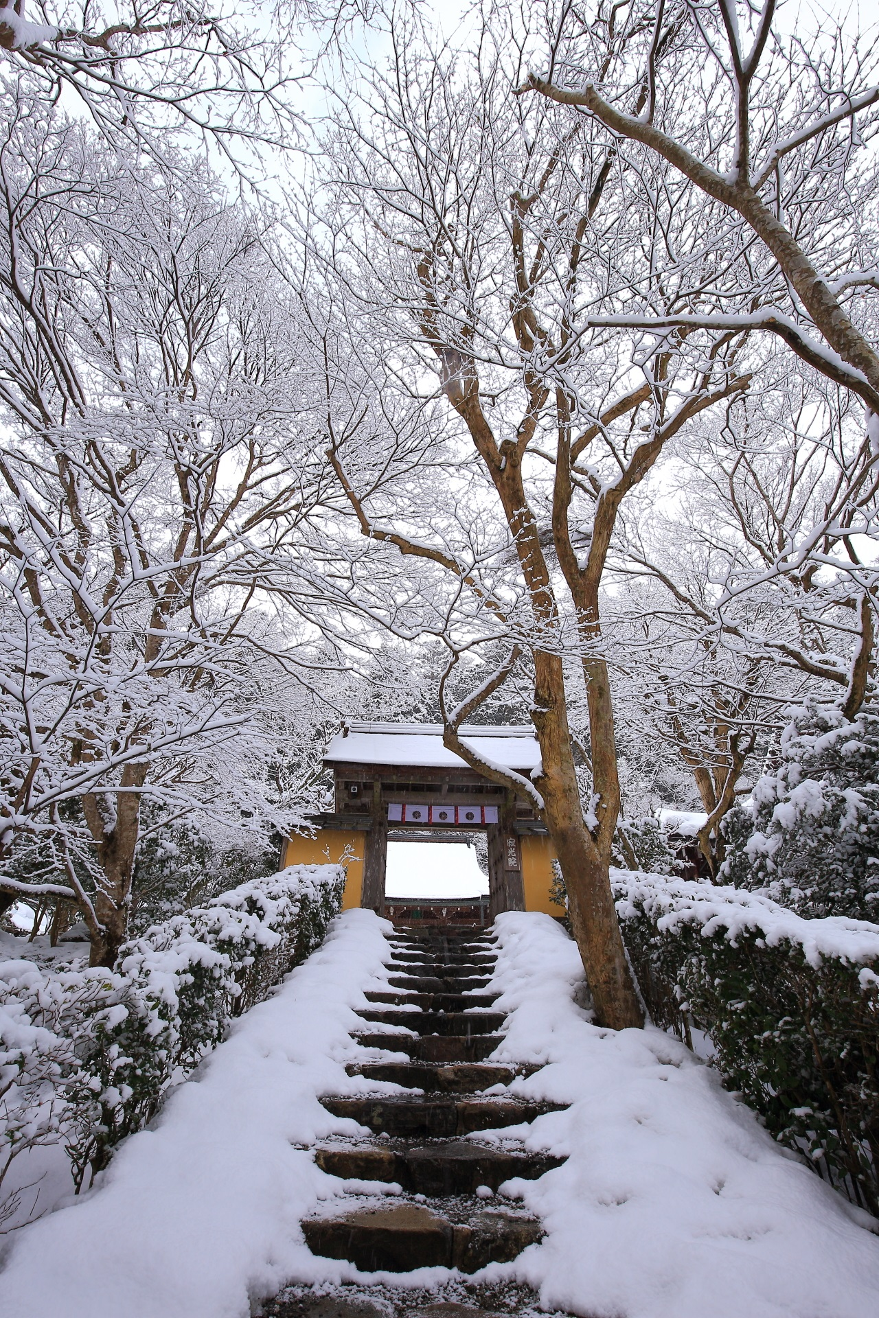 寂光院の山門の見事な雪景色