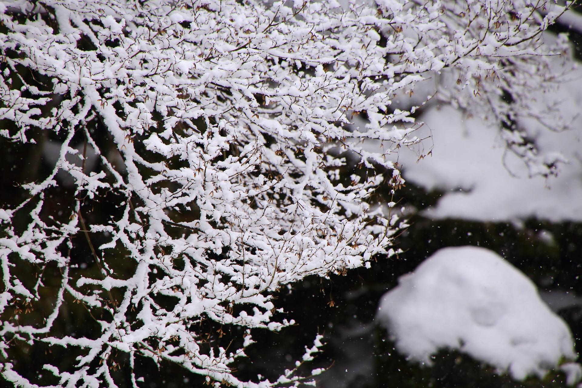 冬の勝林院の華やかな雪の花