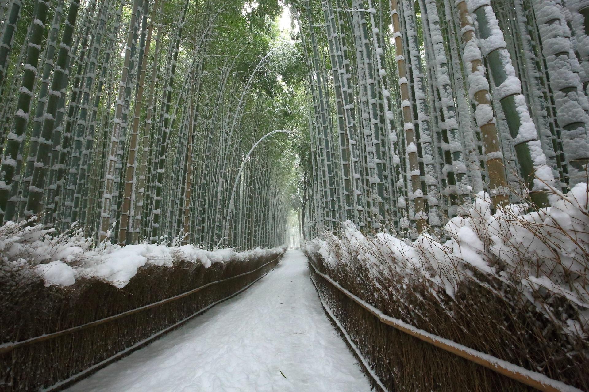 高画質 写真 竹林の道 雪景色
