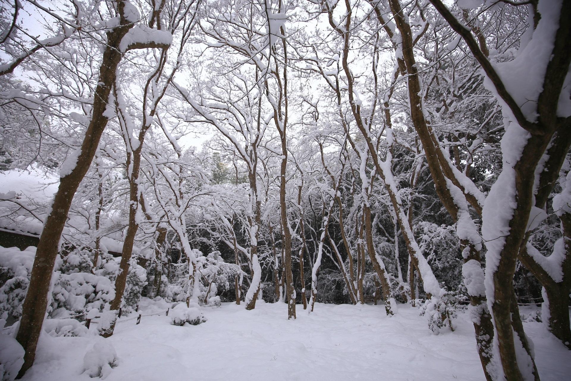 もみじの枝に雪がびっしり積もった祇王寺