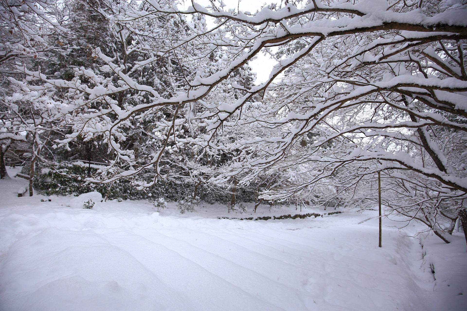 冬の二尊院の白いふわふわの雪