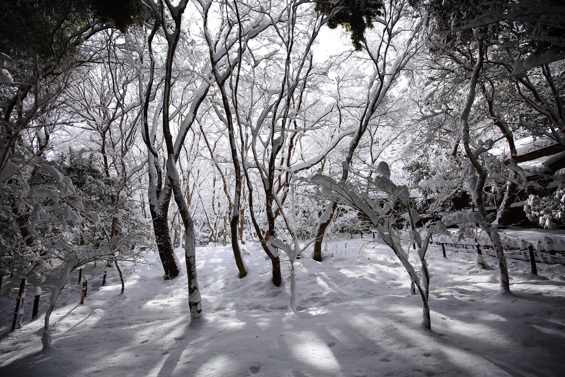 祇王寺の見事な木漏れ日の雪景色