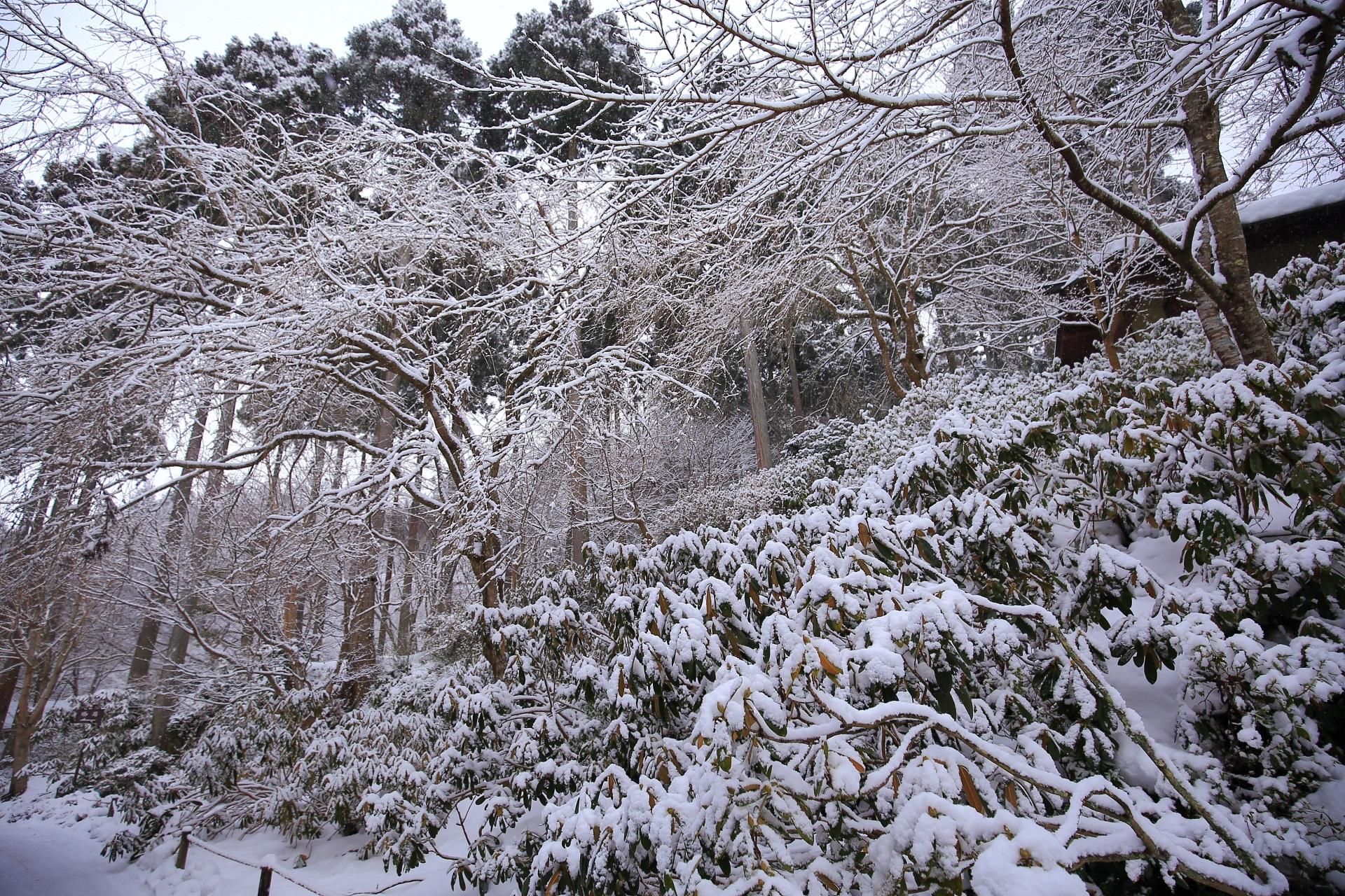 snowy landscape Ohara Sanzen-in Temple in Kyoto,Japan