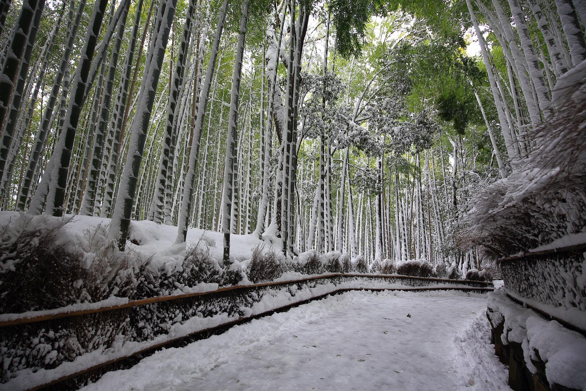 白く雪化粧された竹林の道