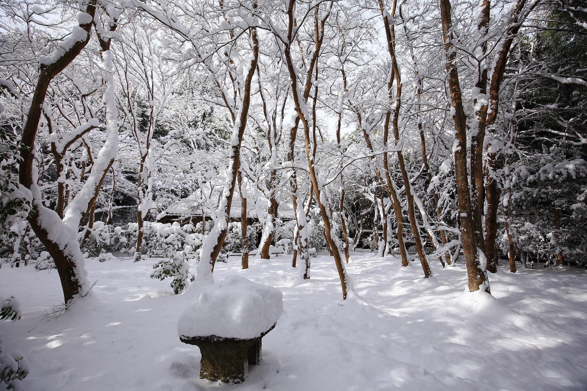 祇王寺の一生もんの圧巻の雪景色